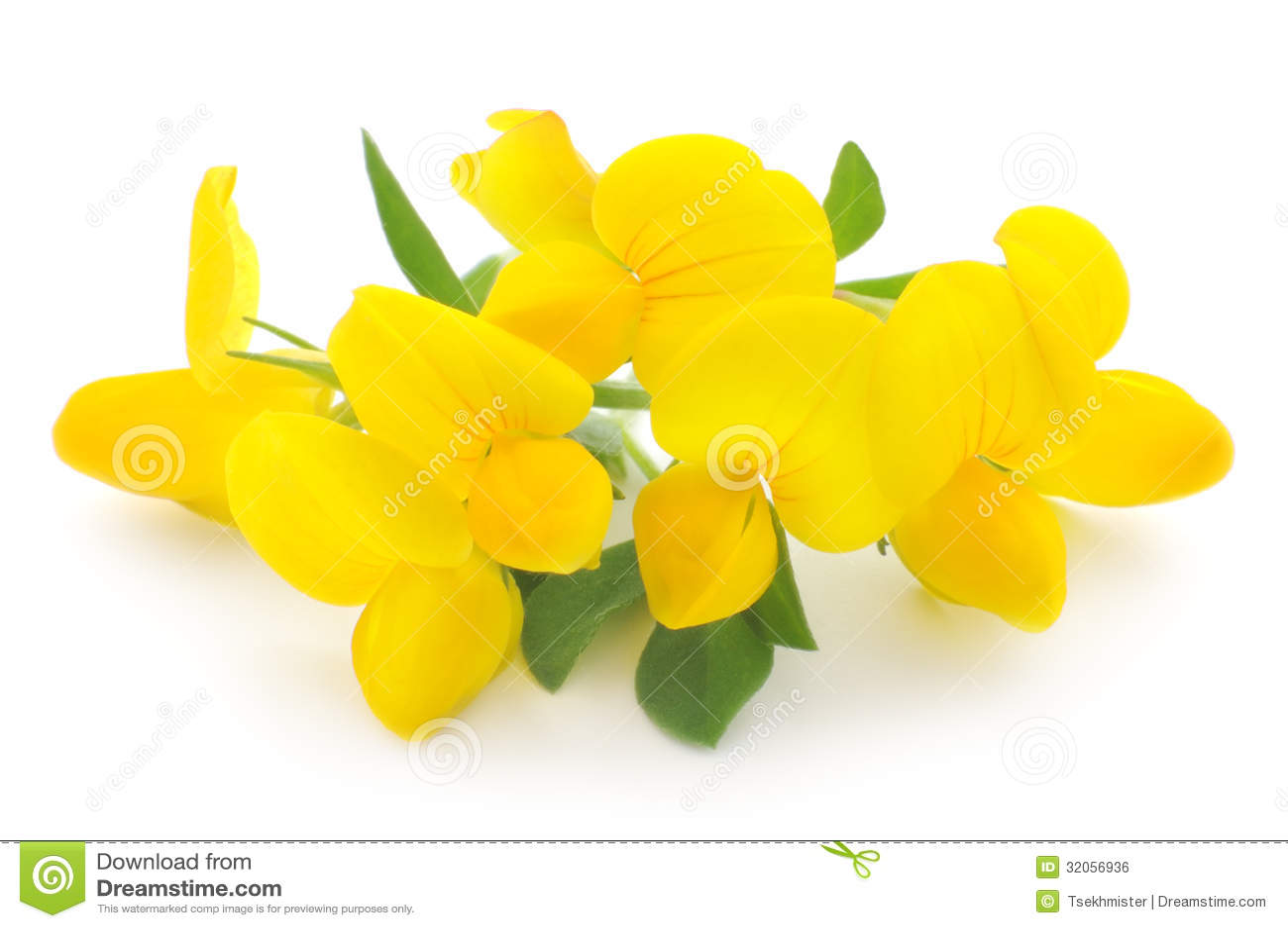 Yellow Flowers Stock Photo Image Of Colors Macro Elegance 32056936