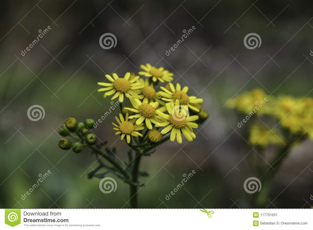Yellow Flowers Zoomed In