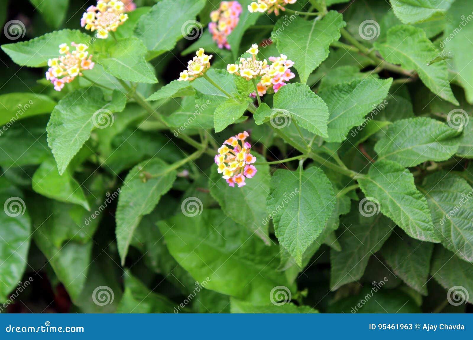 Yellow Foliage And Green Leaf Plant Beautiful Flower On Green Leaf