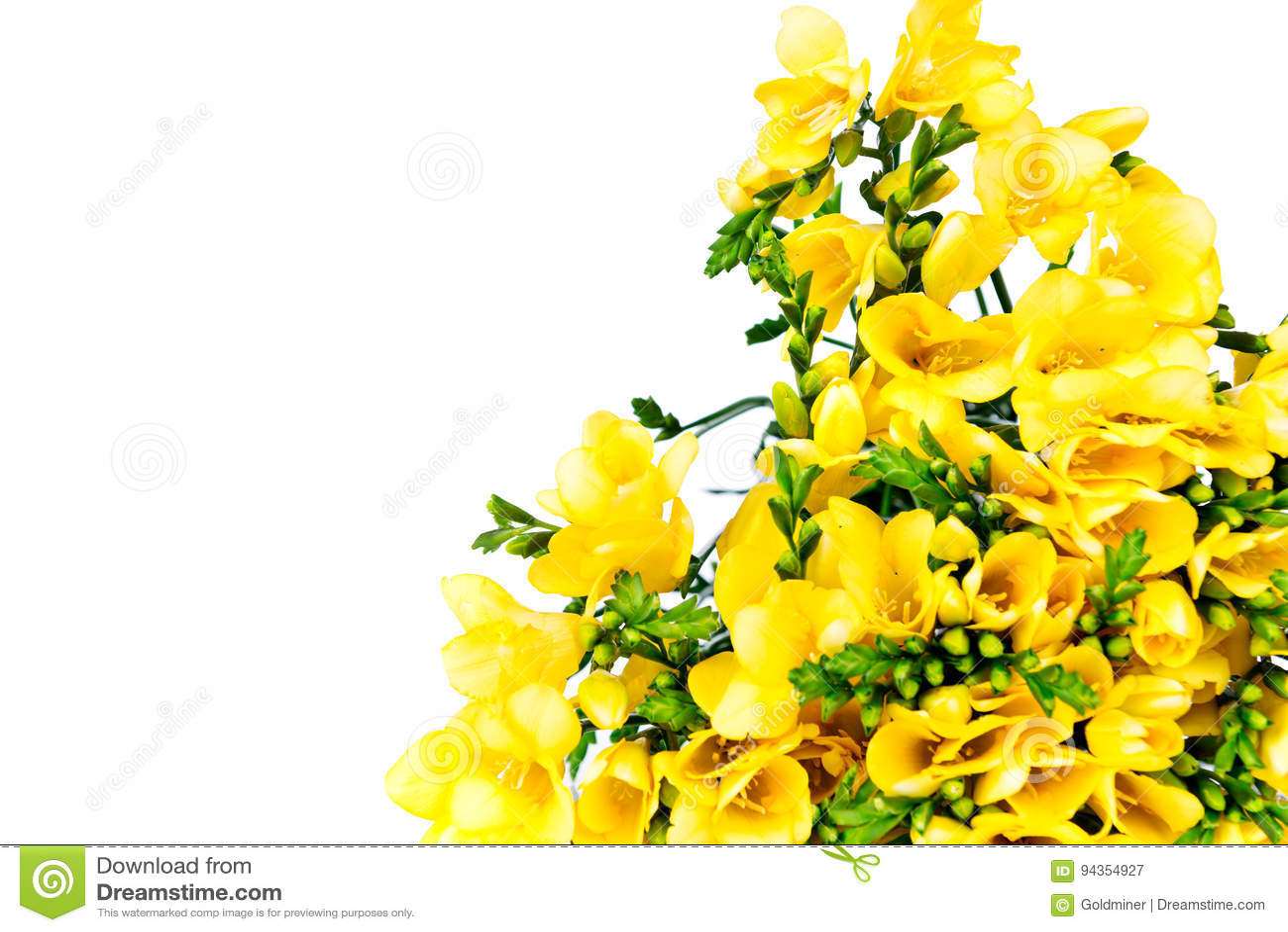 Yellow Freesia Flowers On White Background Stock Image Image Of