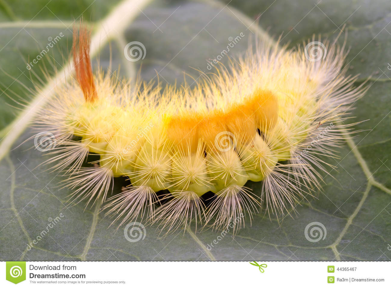 Splitz.......mmmmmm Love green hairy caterpillar babe