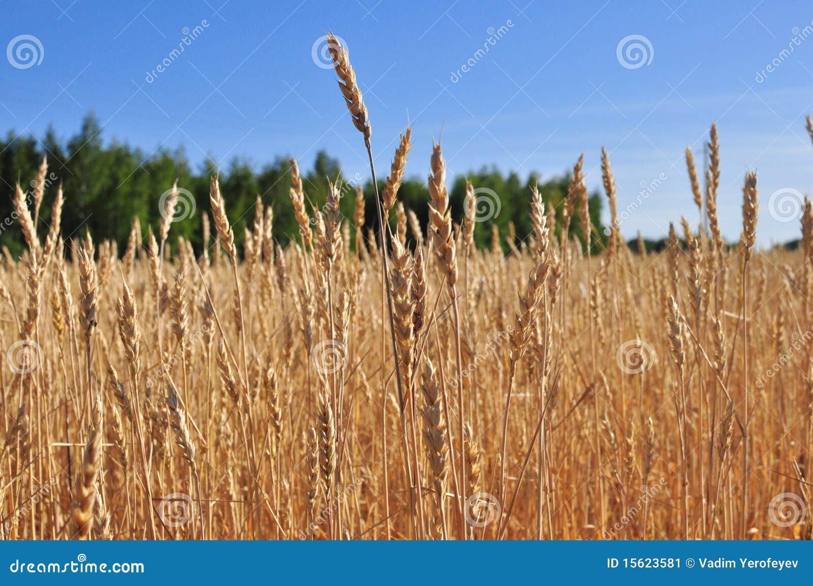united grain grower case essay Bad feminist: essays the light between oceans: a novel extremely loud and incredibly close: a novel  cuál es el ambiente en el que se desarrolla el caso united grain grower el ambiente en el que se desarrolla es en la comercialización y distribución de granos.