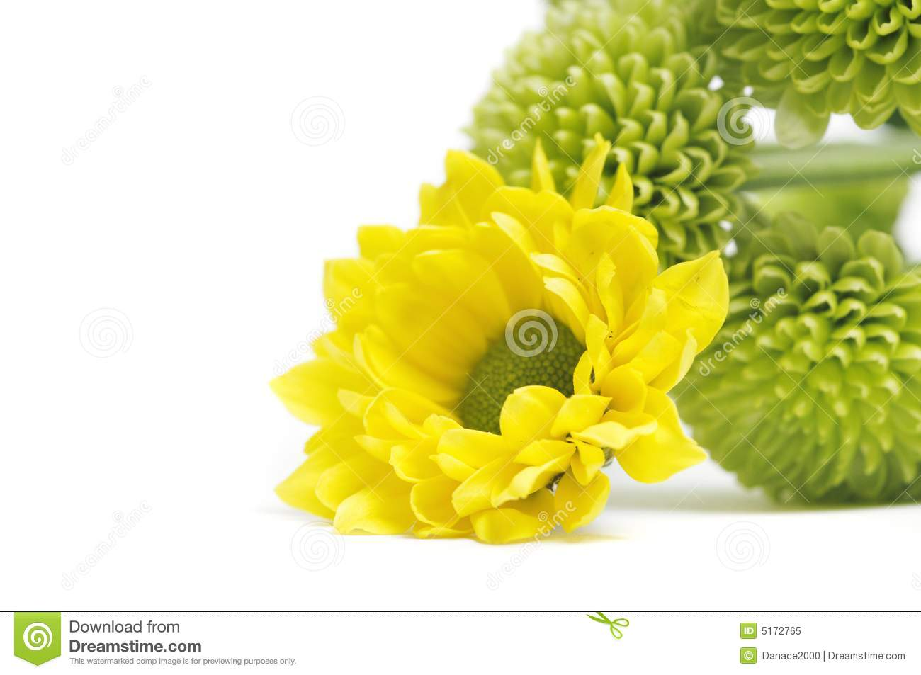Yellow And Green Flowers Royalty Free Stock Photo - Image ... Mayflower Flower Yellow