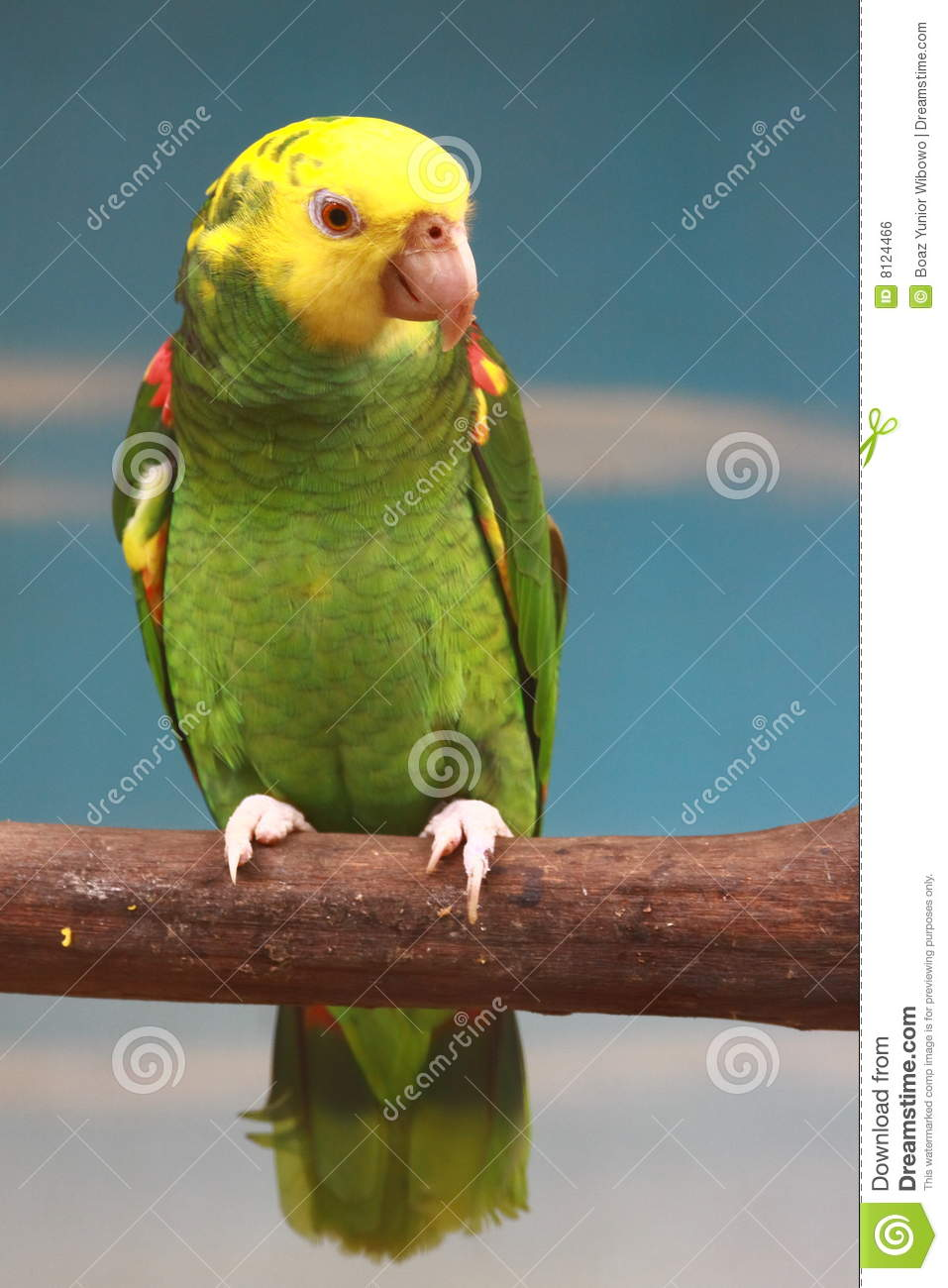 yellow green parrot stock photo image of cute avian 8124466