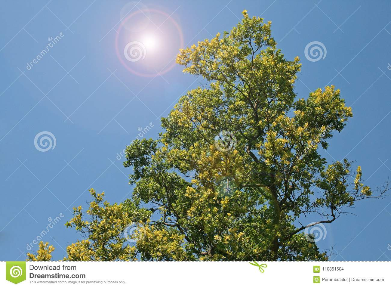 YELLOW AND GREEN TREE WITH ADDED LENS FLARE