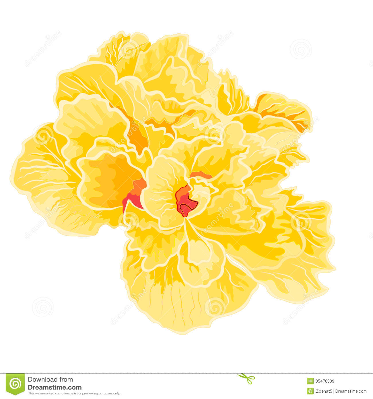 Yellow Hibiscus Full Of Flowers Royalty Free Stock Images ...