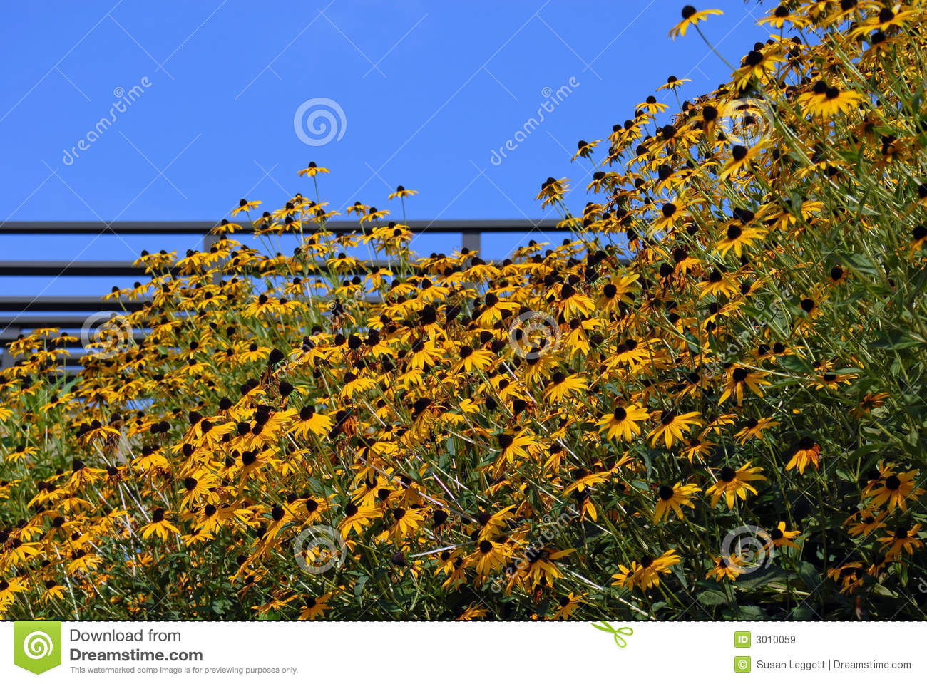 Yellow Hillside Flowers
