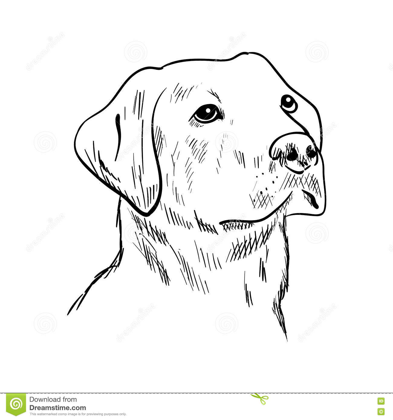 Labrador head coloring pages for Black lab coloring pages