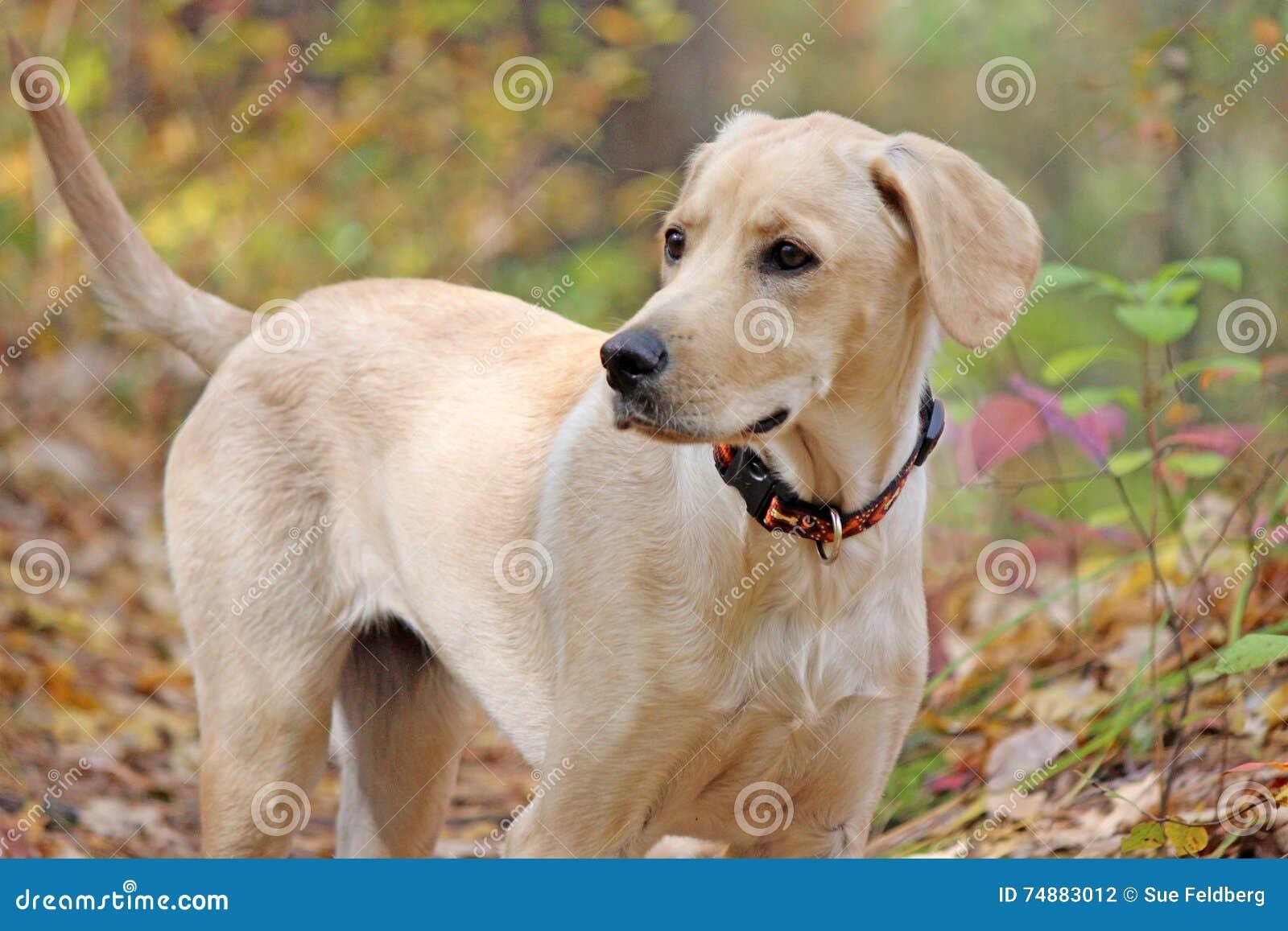 rare dog names - HD1280×853