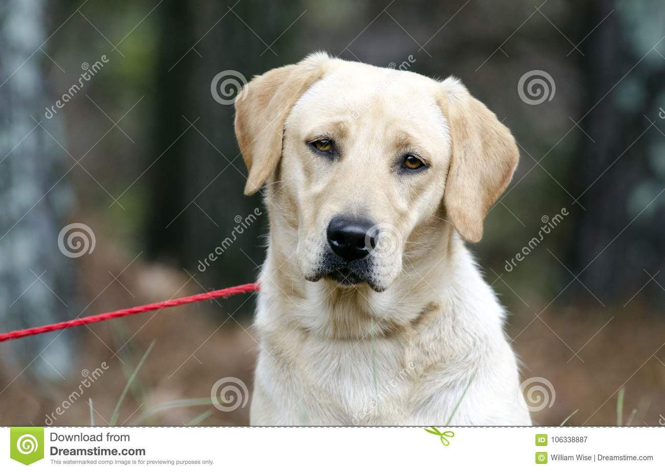 American Shelter Dog Review