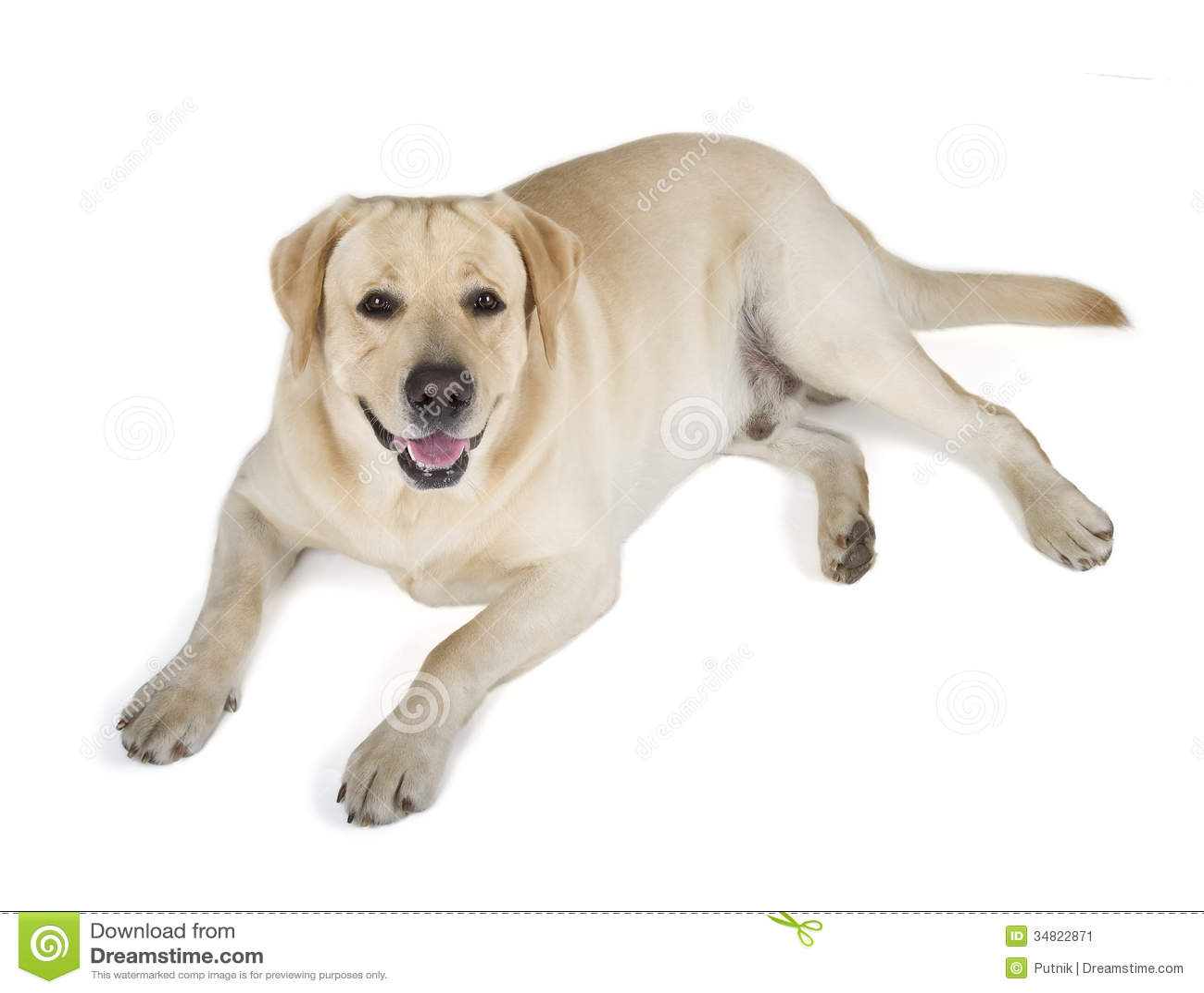 smiling dog white background - photo #6