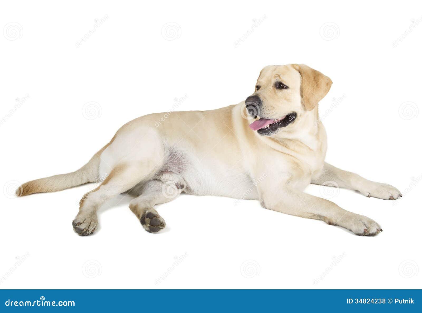 smiling dog white background - photo #9