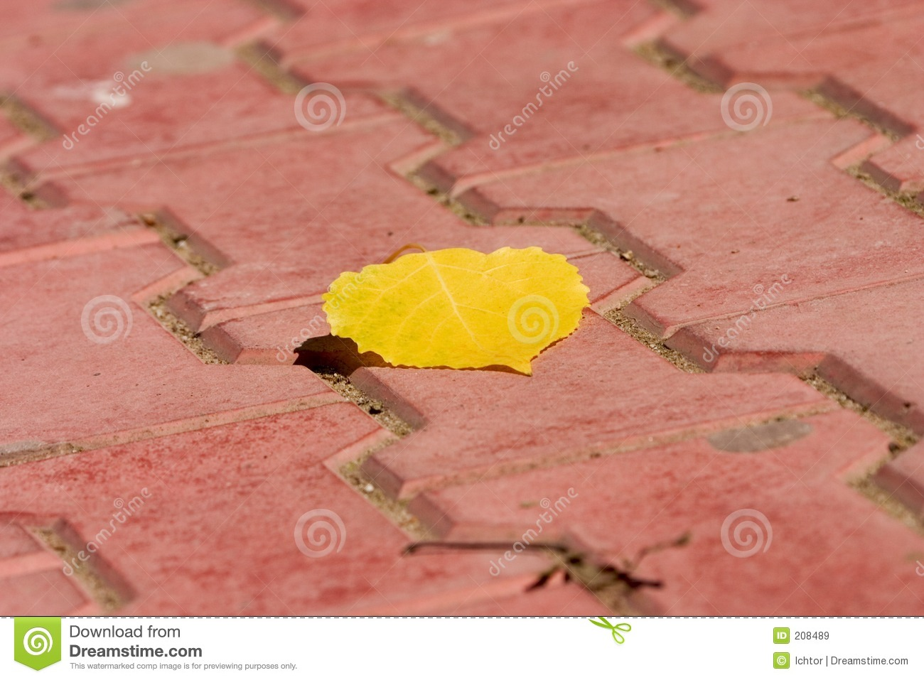 Download Yellow Leaf stock image. Image of fall, vegetation, flagstone - 208489