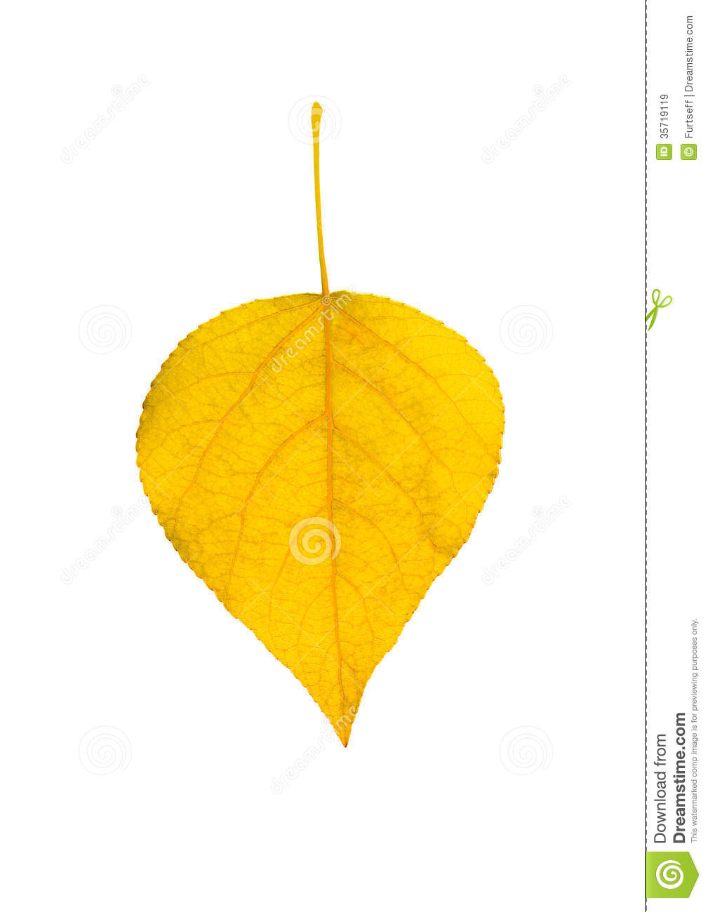 Yellow Leaf Royalty Free Stock Images - Image: 35719119