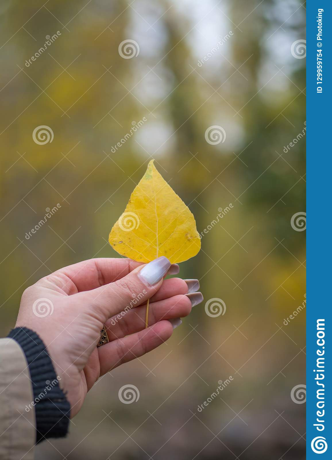 Yellow leaf in woman hand