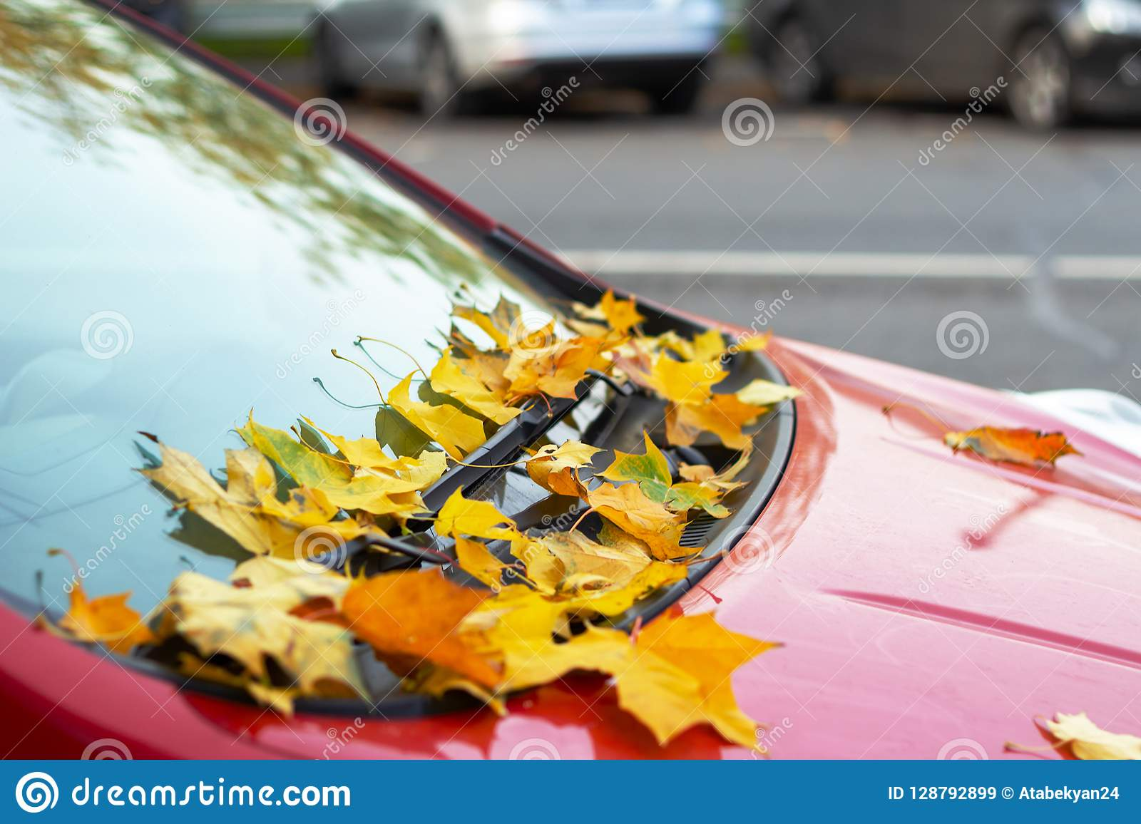 Yellow leaves on the red car