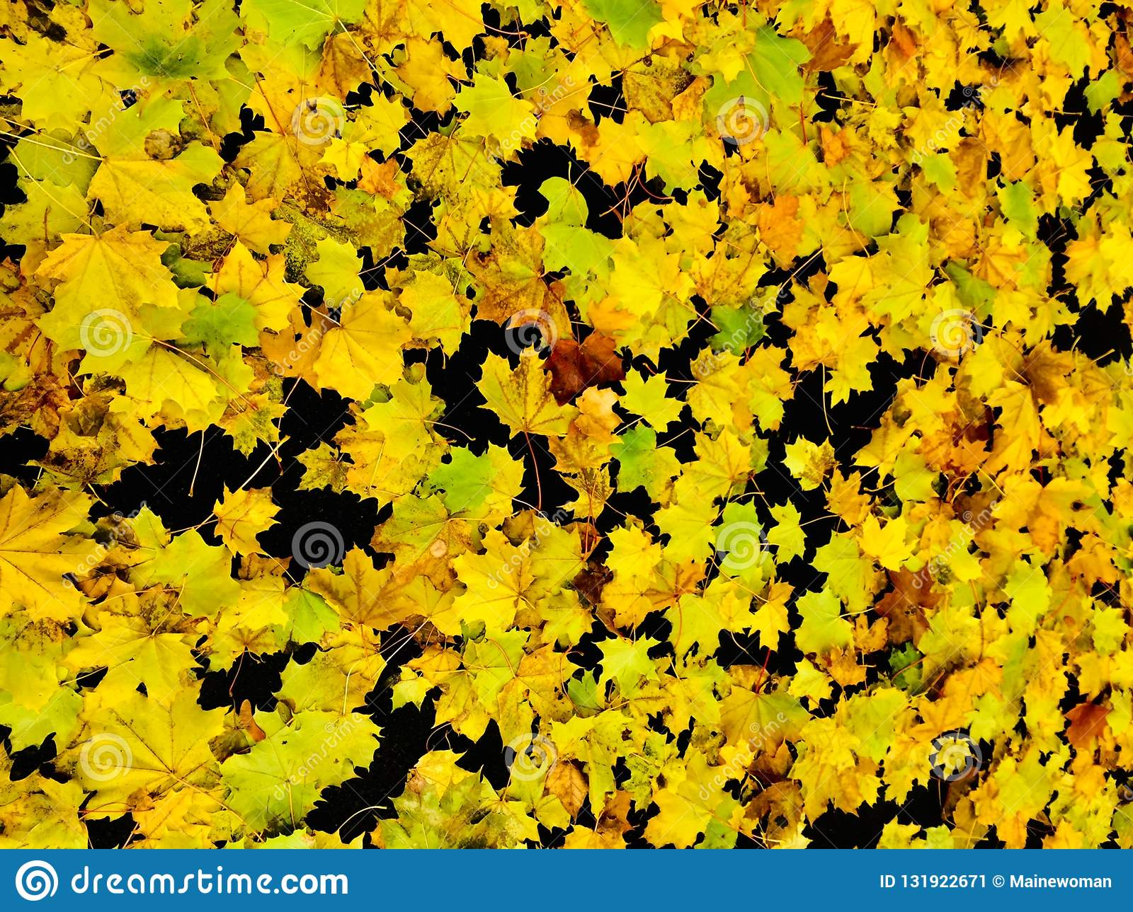Yellow leaves on black background