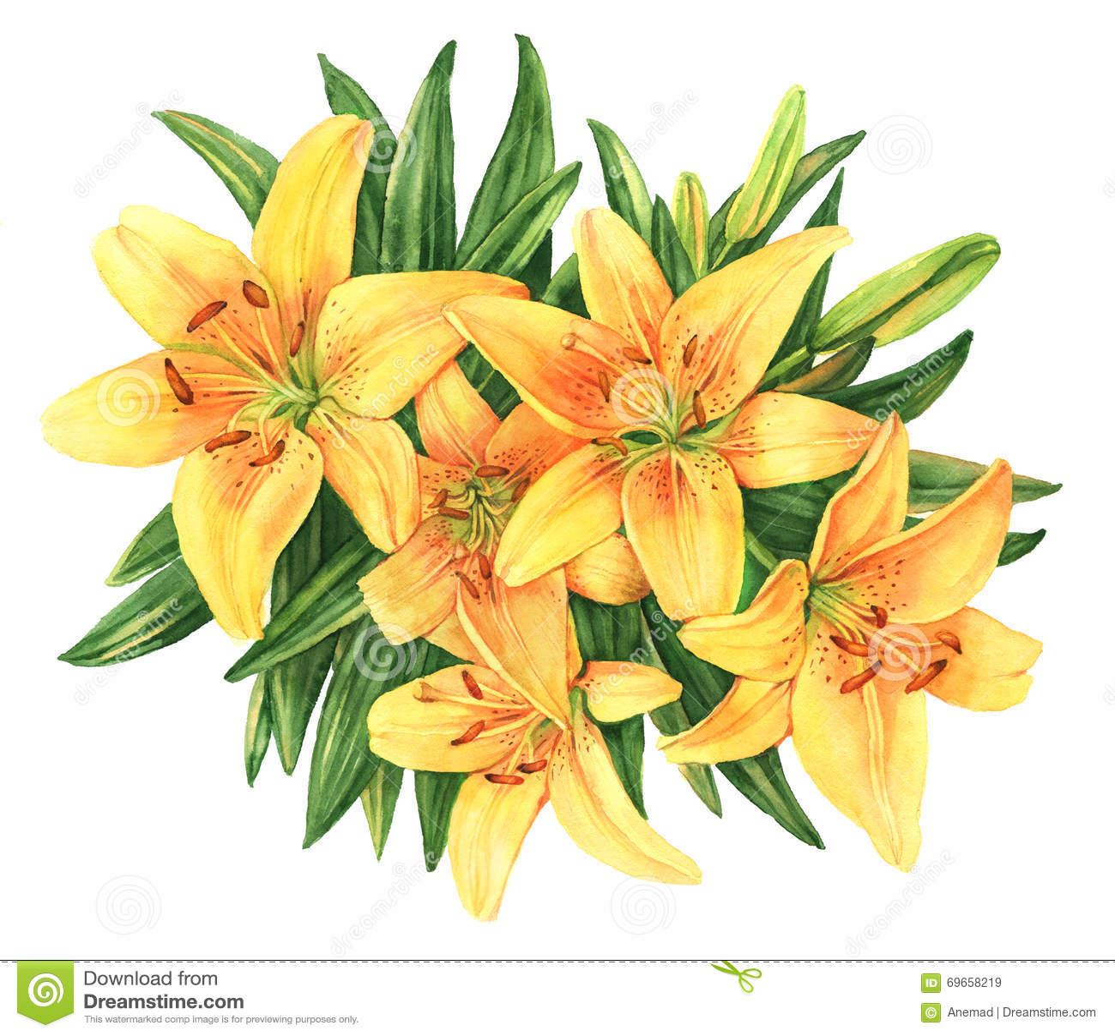 Yellow lilies bouquet flower watercolor illustration