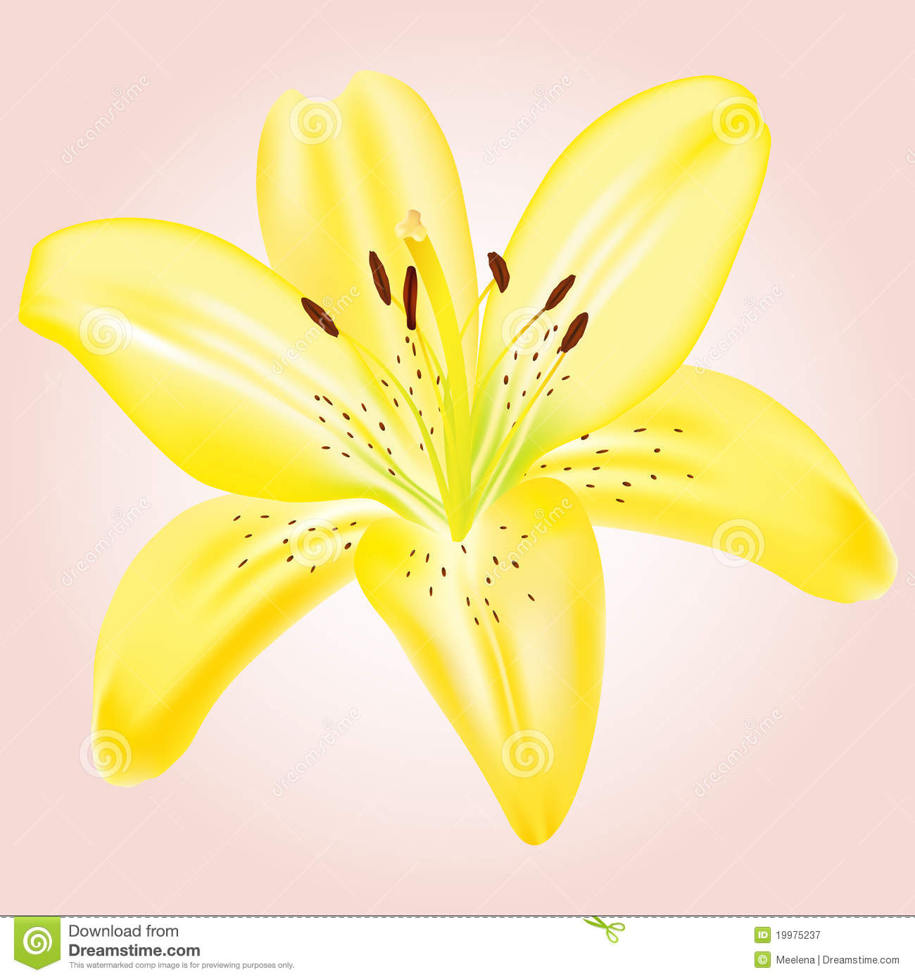 yellow lily flower royalty free stock photography  image, Beautiful flower