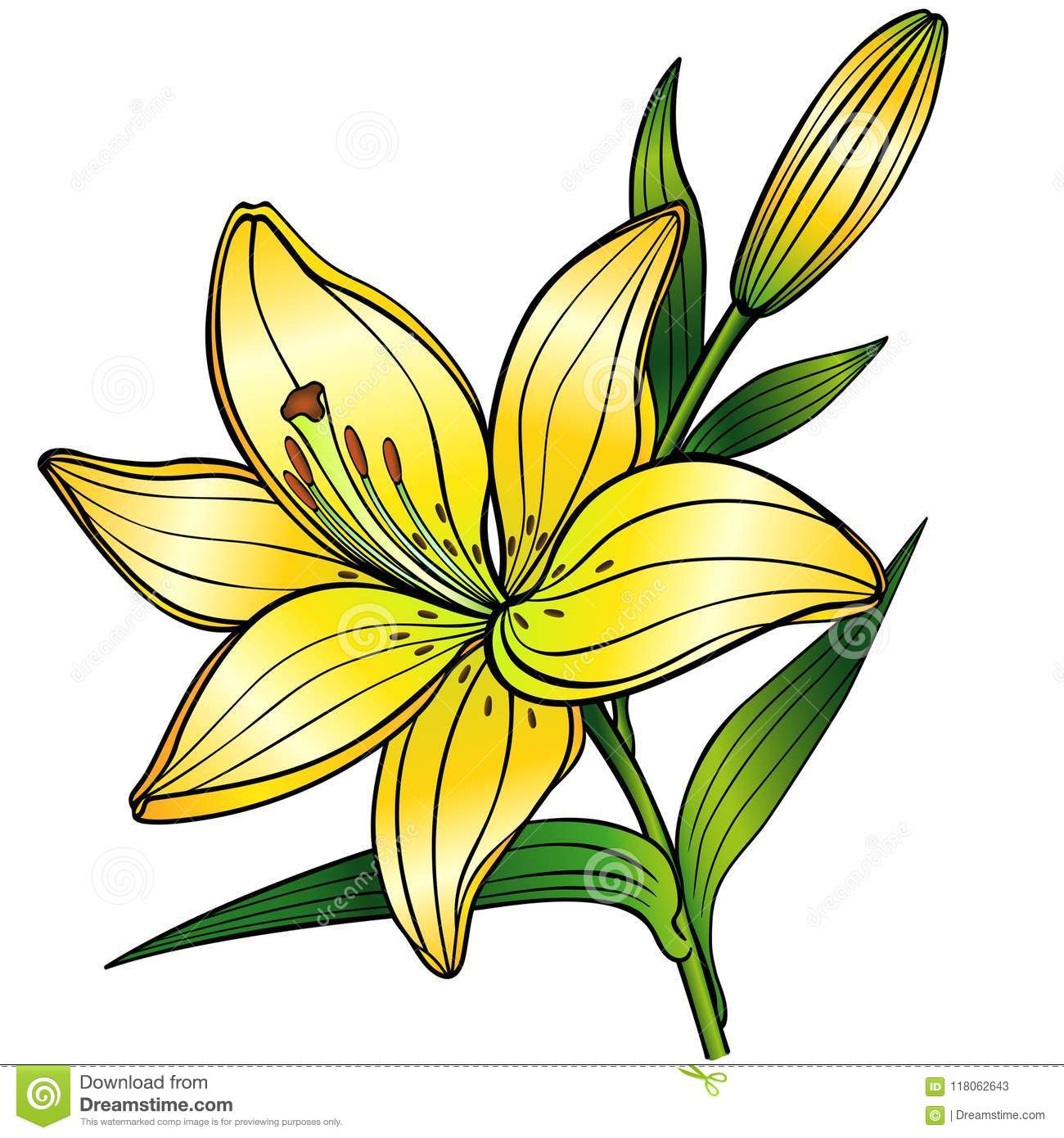 Yellow lily flower with budnear drawing with gradient stock yellow lily flower with budnear drawing with gradient izmirmasajfo