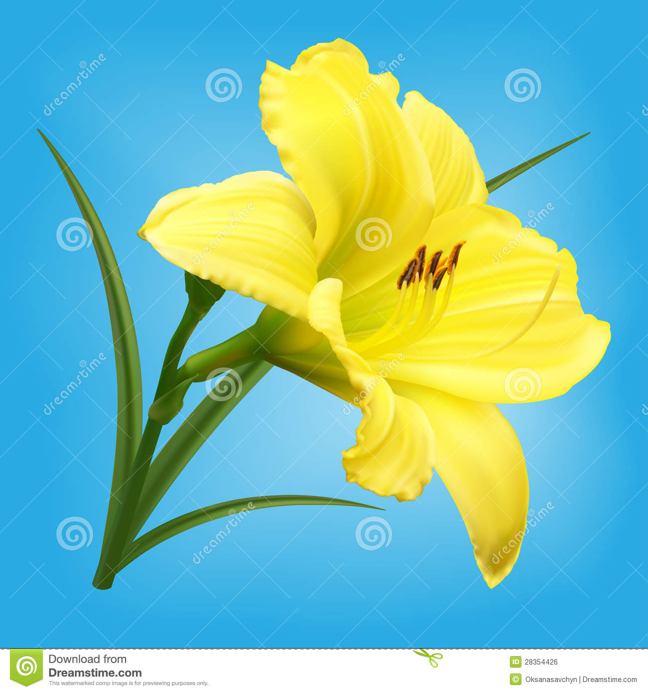 yellow lily flower  flower, Beautiful flower