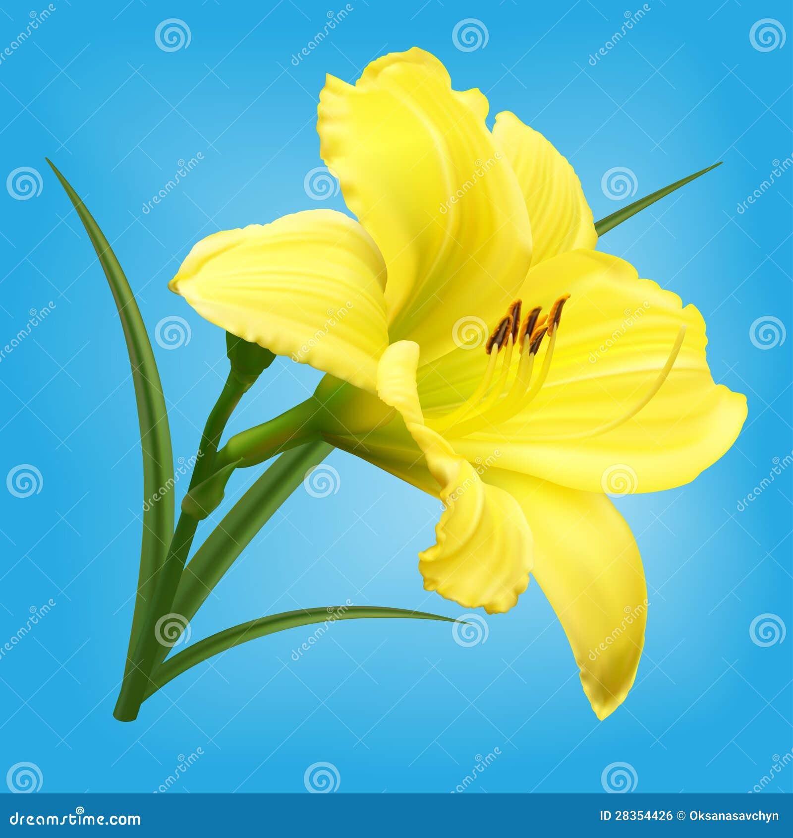 Yellow lily flower on light blue background stock vector yellow lily flower on light blue background izmirmasajfo