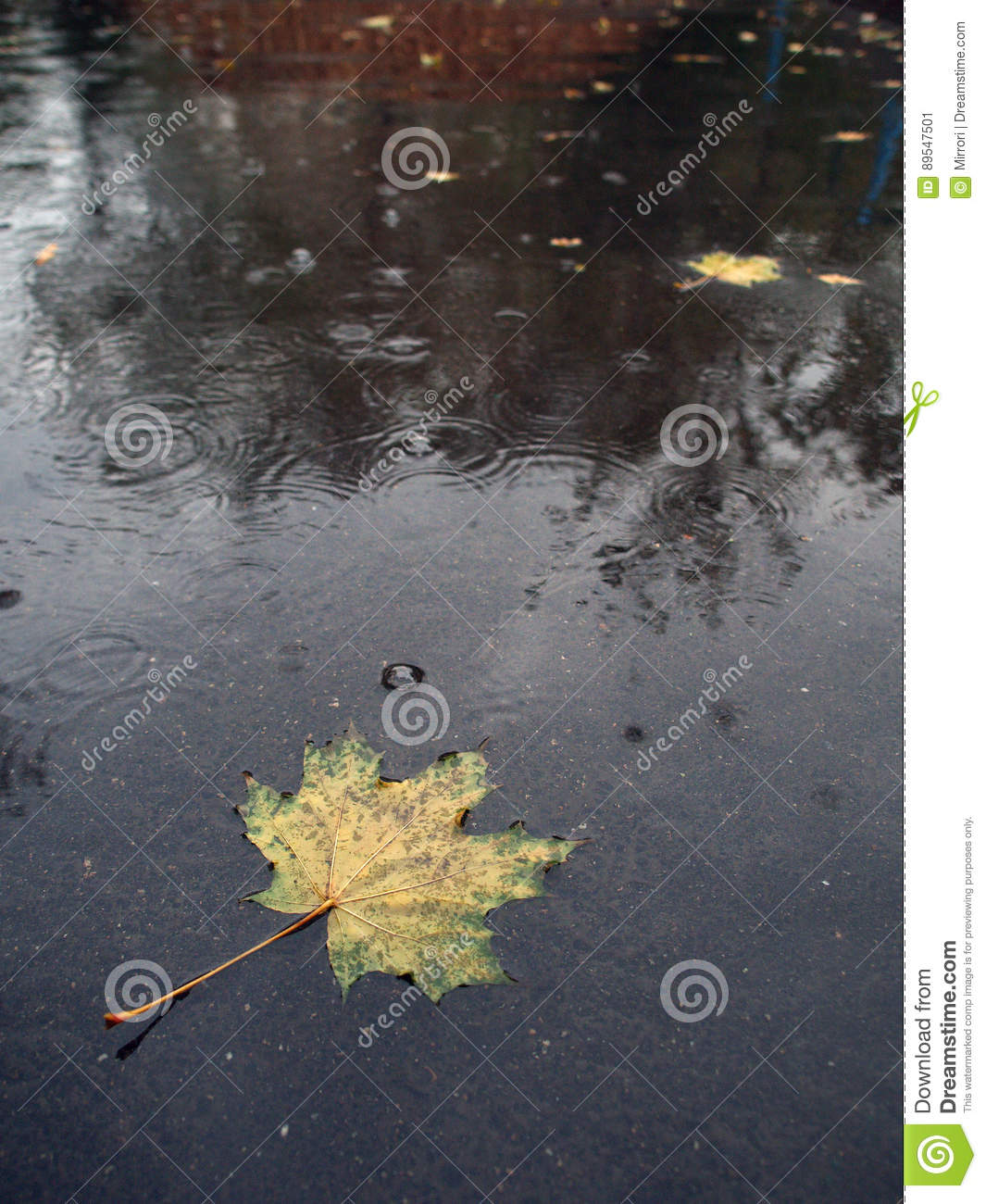 A Yellow Maple Leaf In Blue Puddle: The Gray Sky, Vegetation, Houses ...