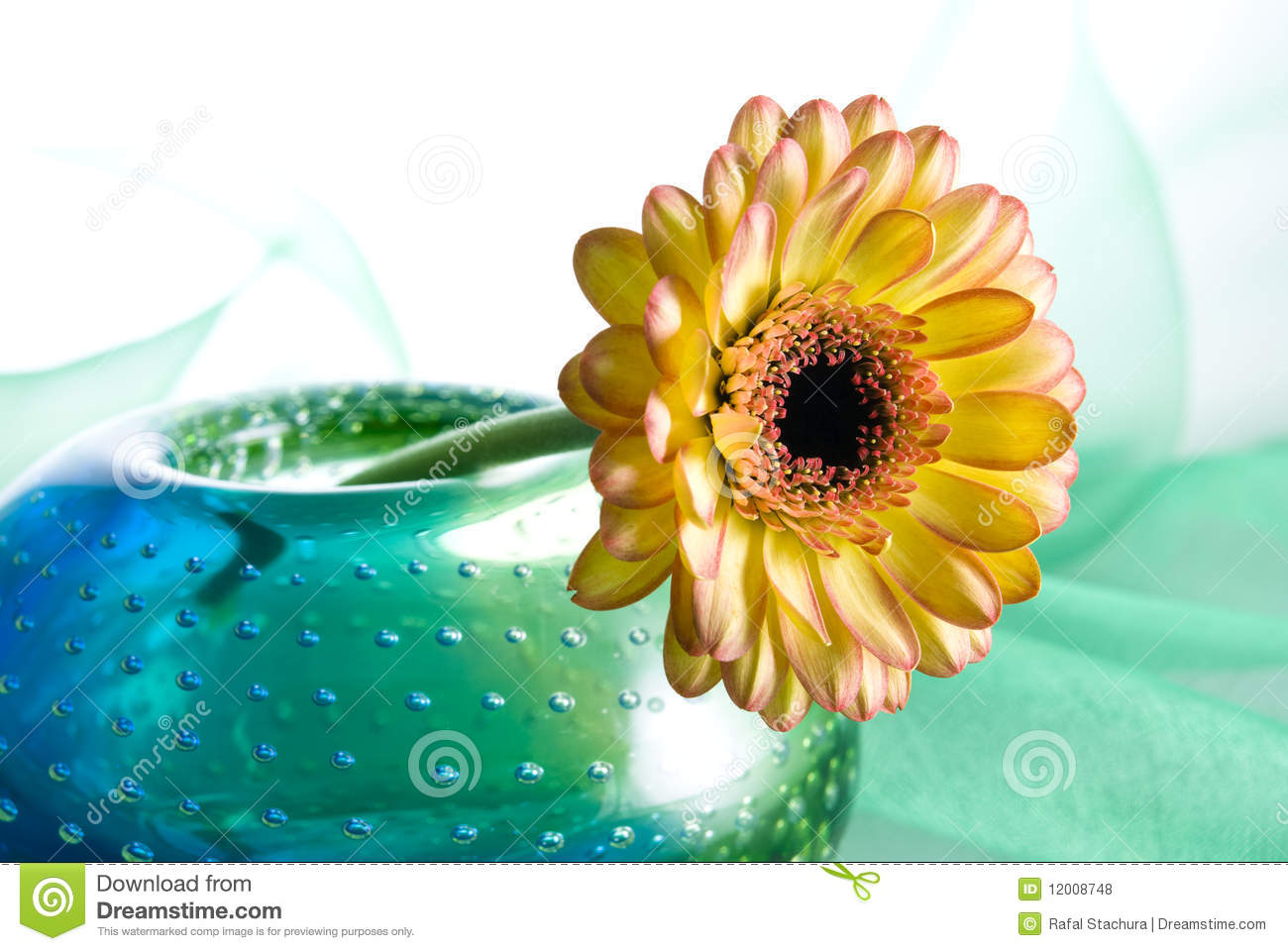 Yellow Margarita Flower Royalty Free Stock s Image