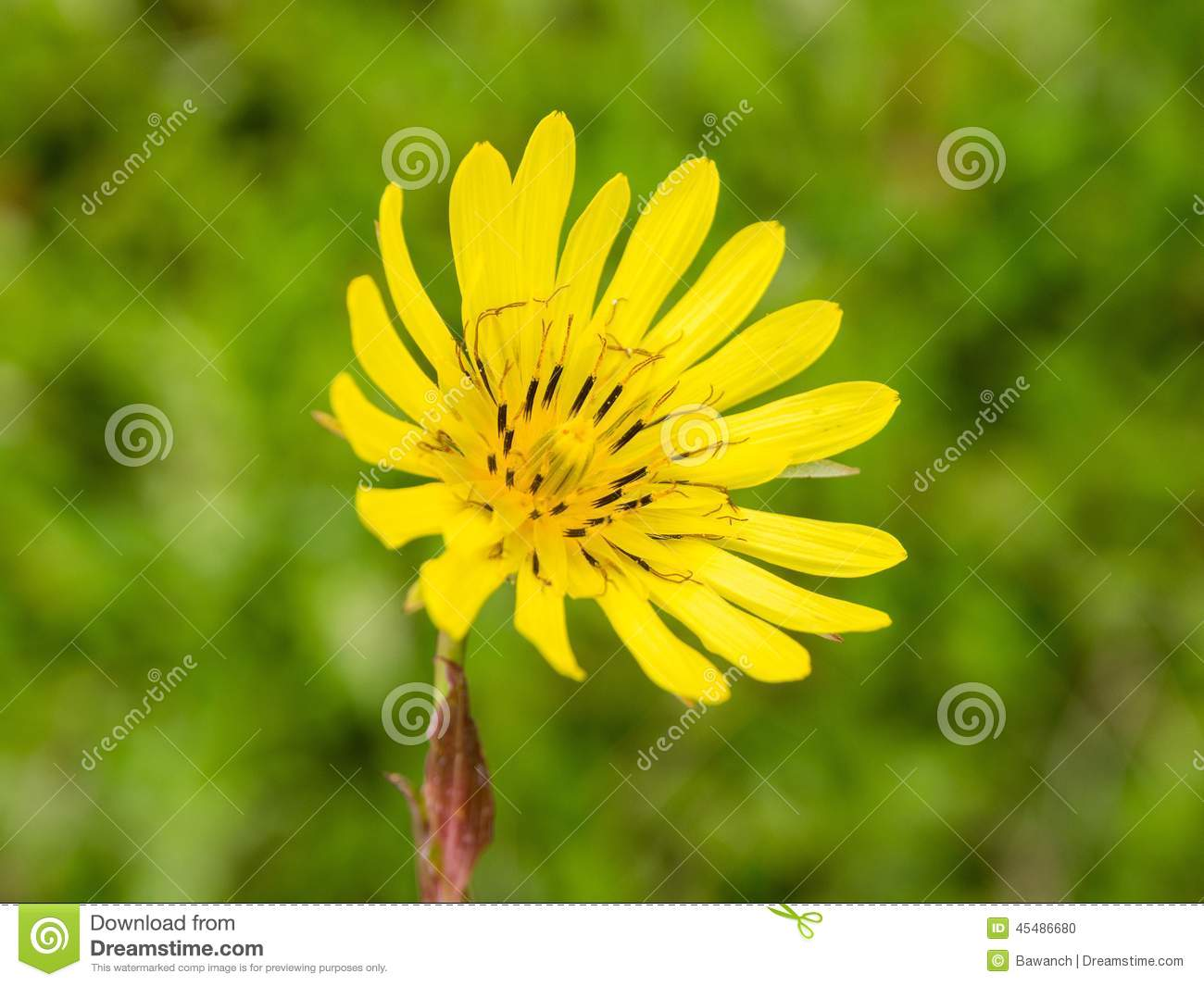 Yellow meadow flower stock photo image of light endless 45486680 download yellow meadow flower stock photo image of light endless 45486680 mightylinksfo