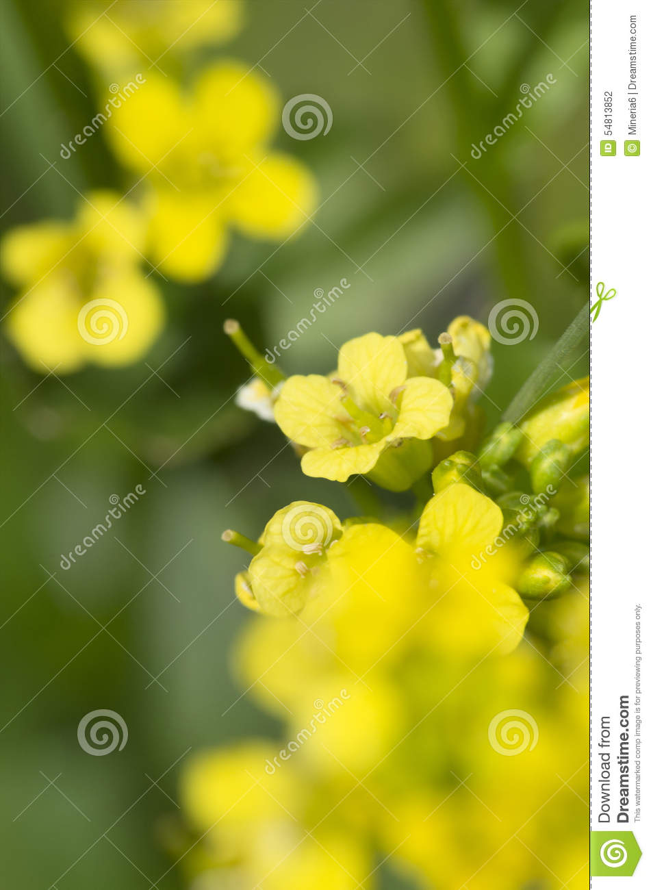 Yellow Mountain Flowers Closeup Stock Photo Image Of Shot Blue