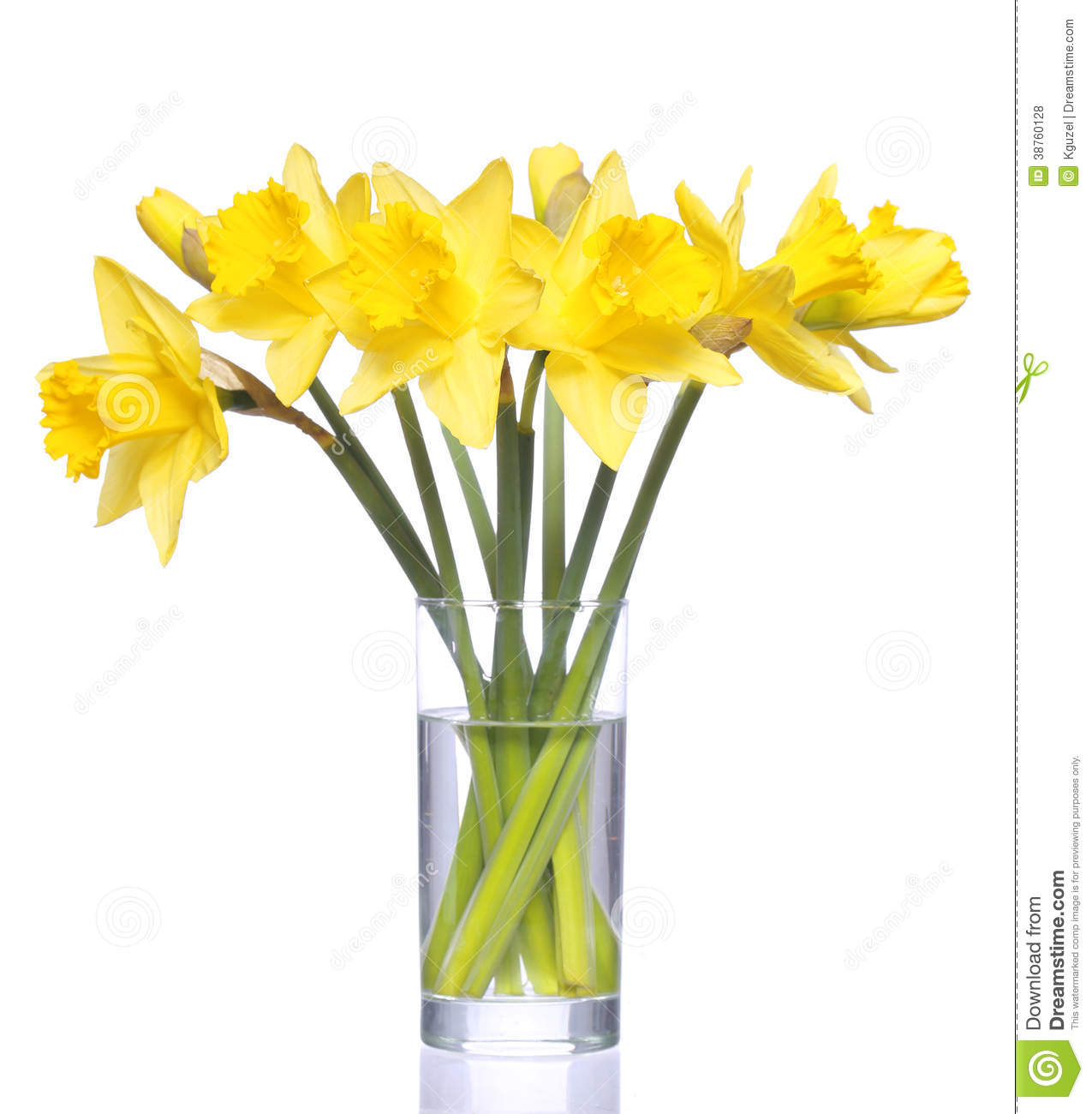 Yellow Narcissus In Transparent Vase Isolated Stock Photo
