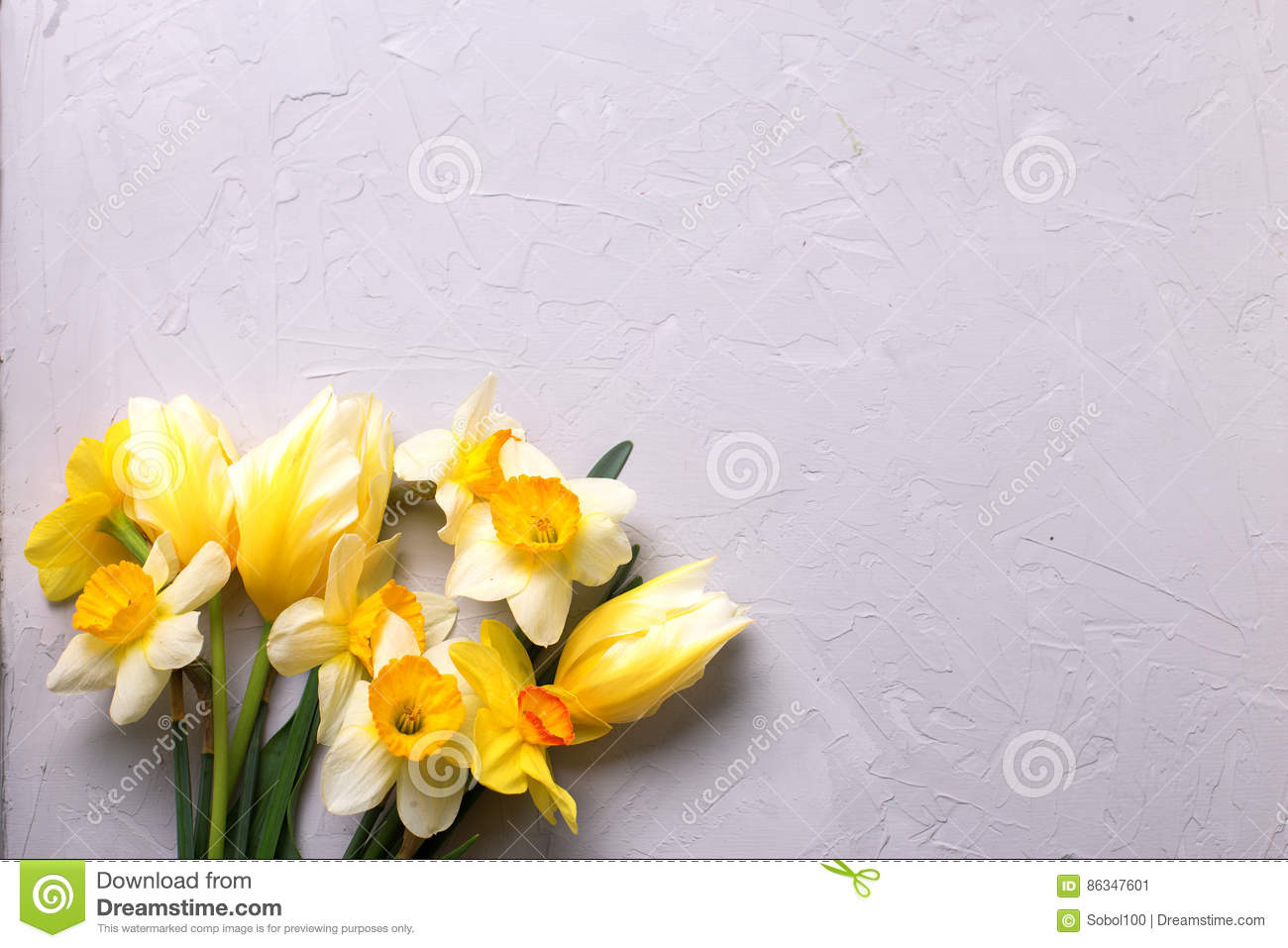 Yellow Narcissus And Tulips Flowers On Grey Background Stock Image