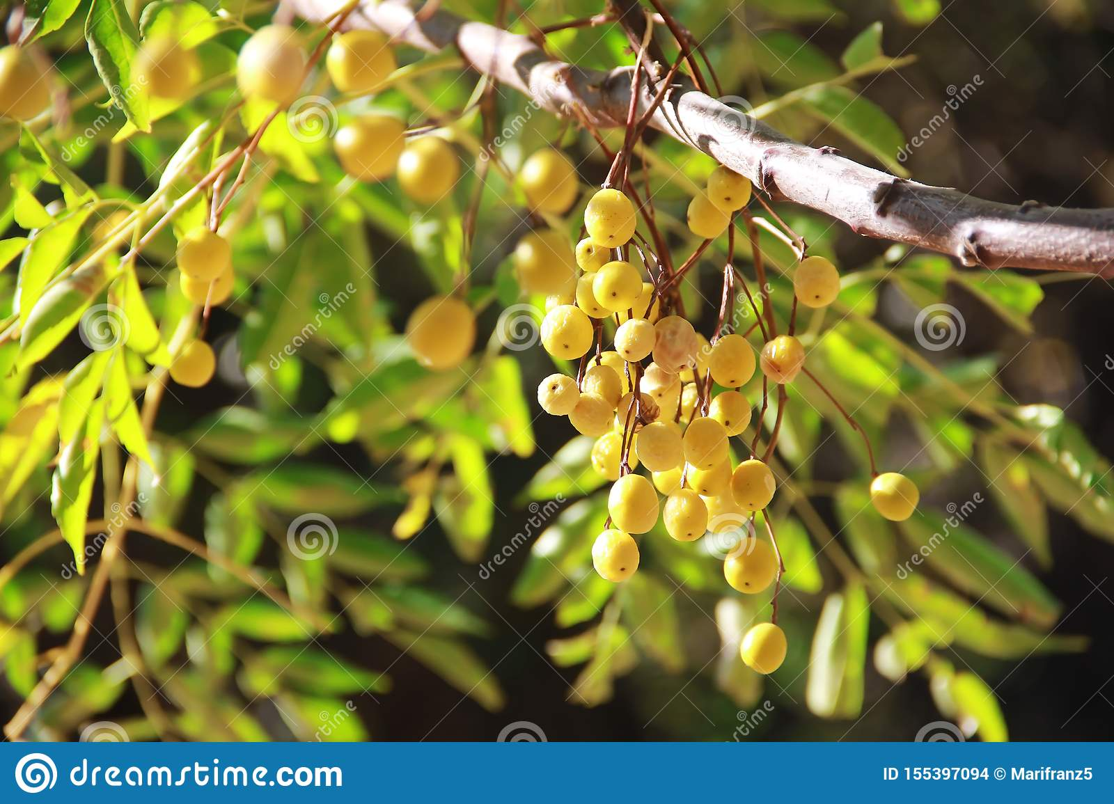 Yellow natural autumn berries sea buckthorn, mountain ash, physalis on a branch