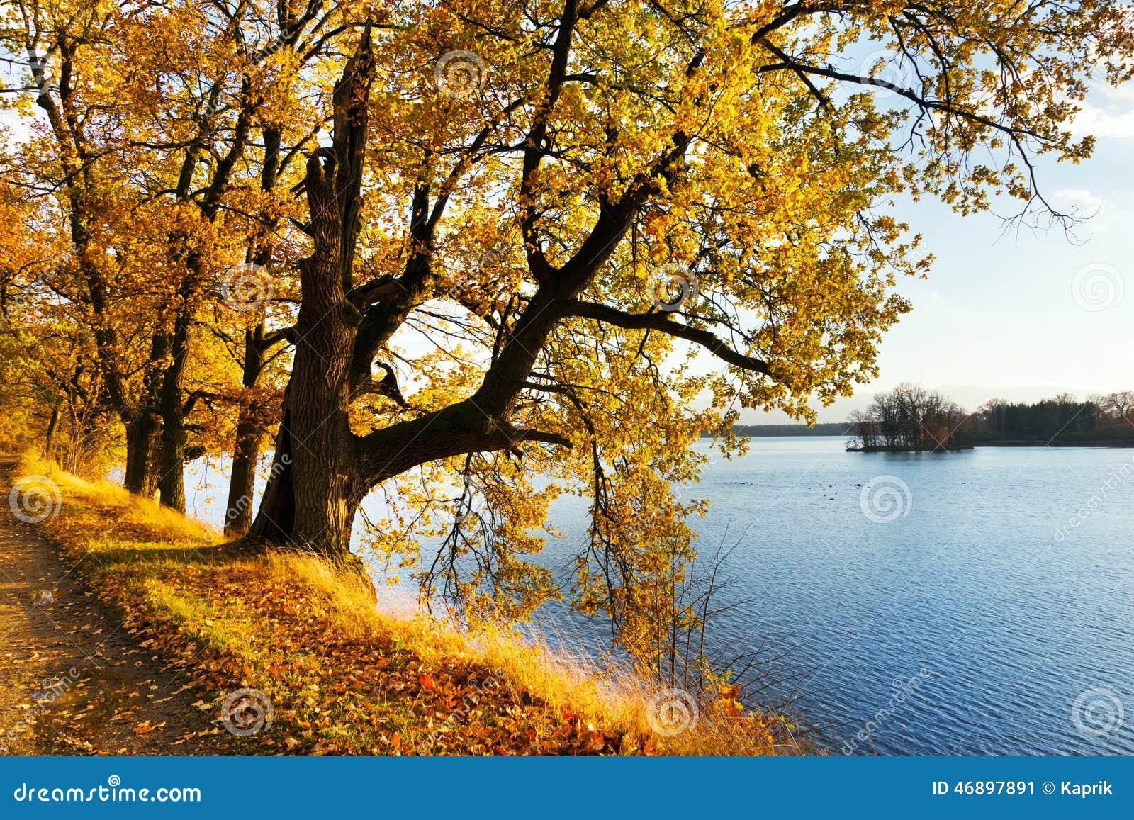 Yellow oak trees on svet pond embankment in trebon stock for Design of pond embankment