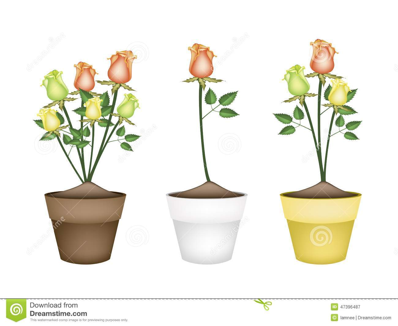 Yellow Orange And Green Roses In Ceramic Flower Pots Stock Vector