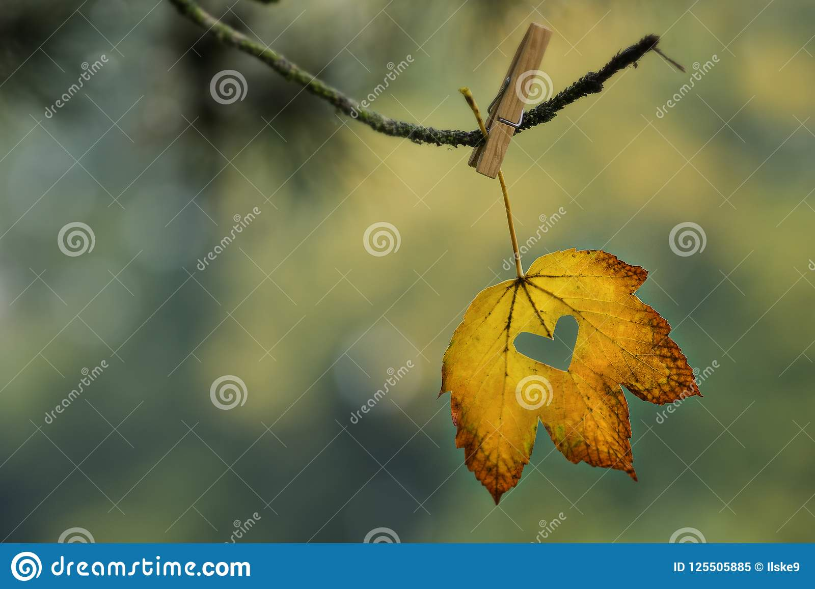 Yellow and orange leaf with cut out heart hanging on branch with clothespin