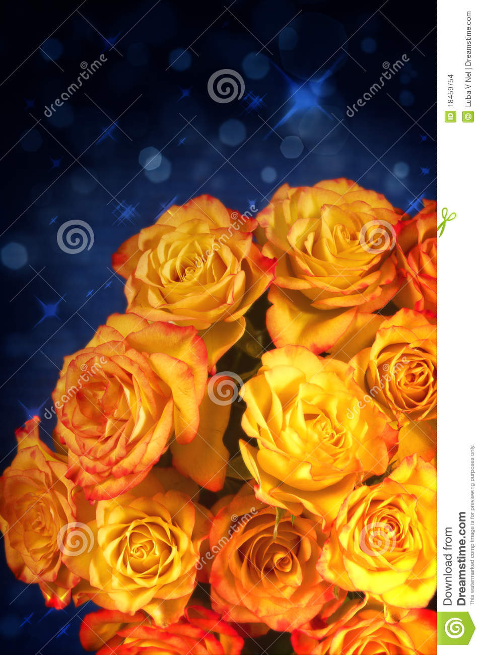 Yellow And Orange Roses Over Blue Background Stock ...