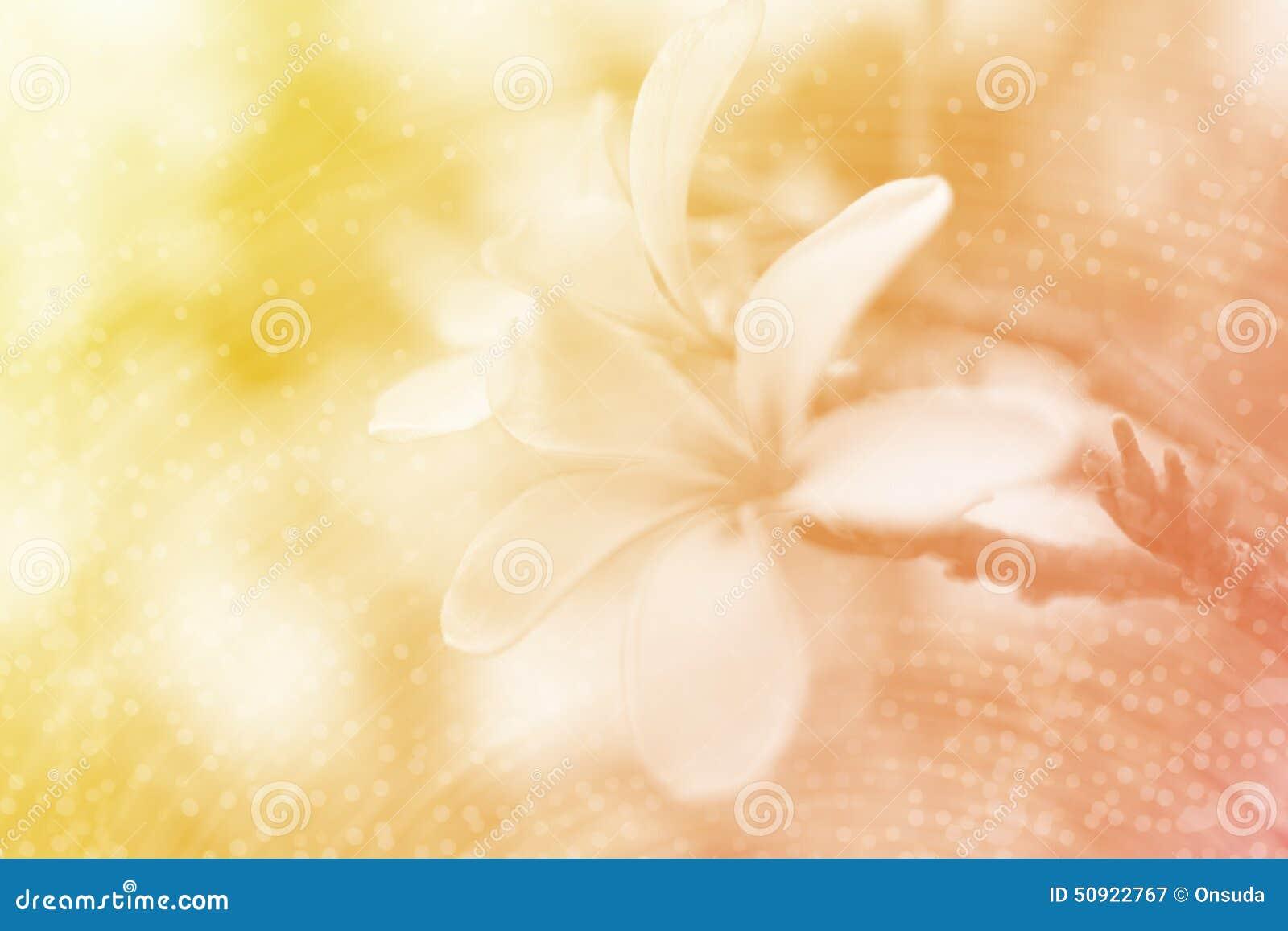 Soft Orange Color Yellow And Orange Soft Flower Background Stock Photo  Image 50922767