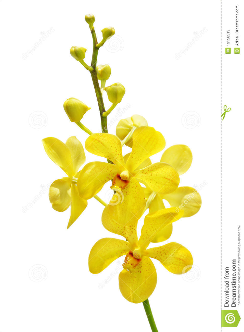 Yellow Orchid Royalty Free Stock Images - Image: 13158519 Leelawadee