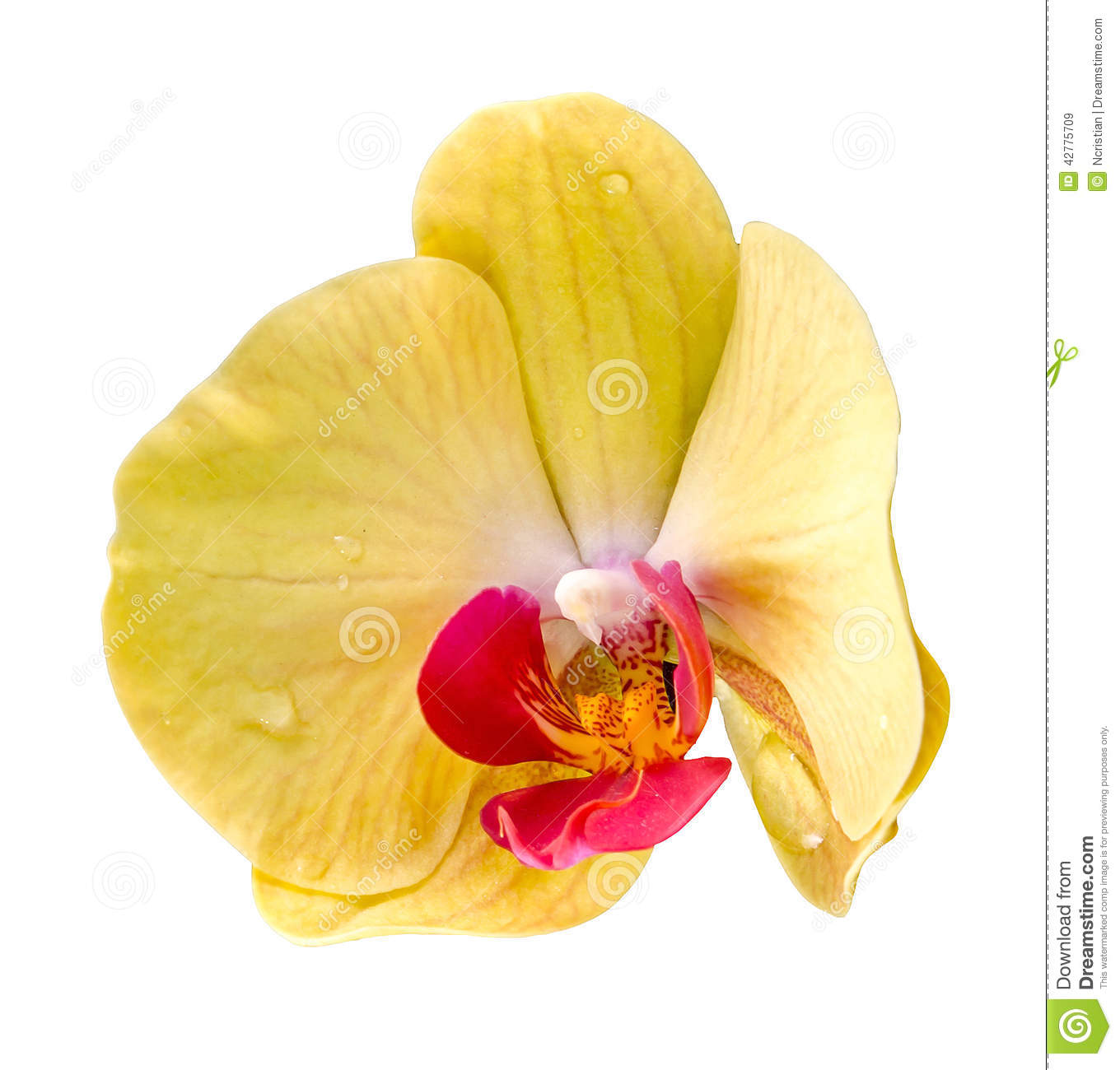 Yellow Dess Phalaenopsis Orchid Seeds Flower Indoor Bonsai Orchids Plant 200 Particles Lot