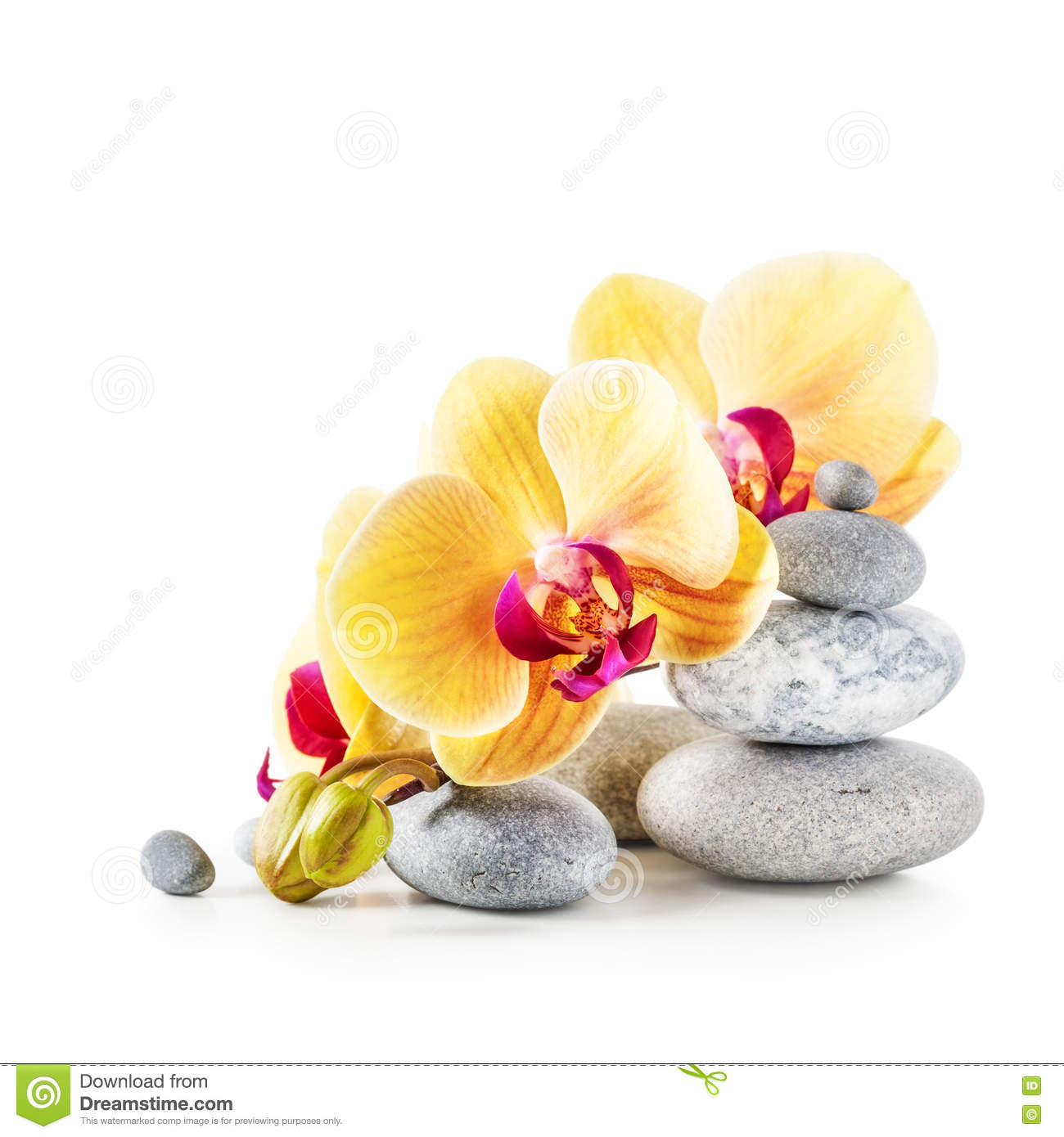Yellow orchid flowers and spa stones stock image image of medicine yellow orchid flowers and spa stones mightylinksfo