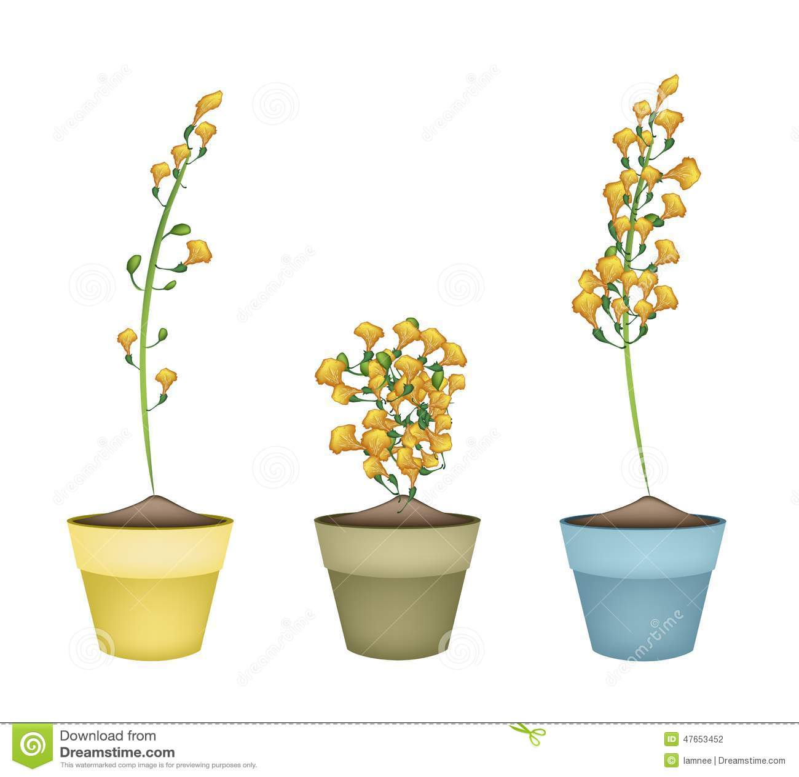 Yellow Padauk Flower In Ceramic Flower Pots Illustration 47653452