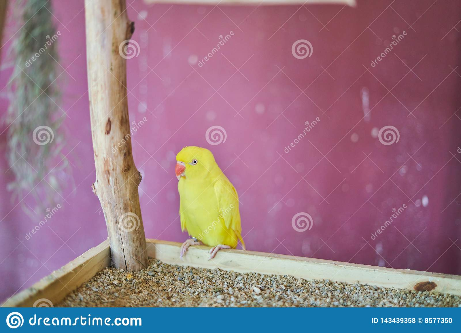 Yellow parrot sitting on a branch