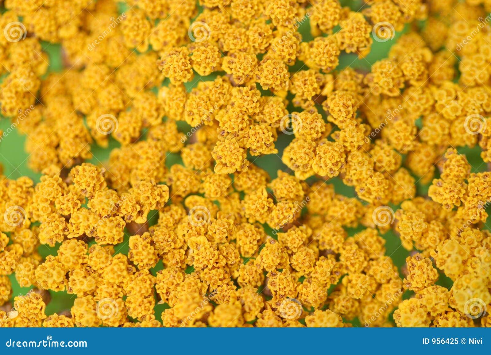 Yellow Flowers Stock Image Image Of Bunch Macro Background 956425