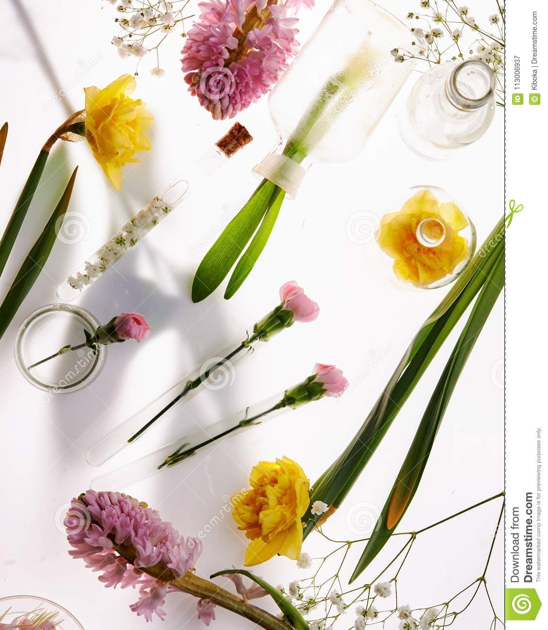Fresh spring flowers stock image image of nature beauty 113006937 download comp mightylinksfo