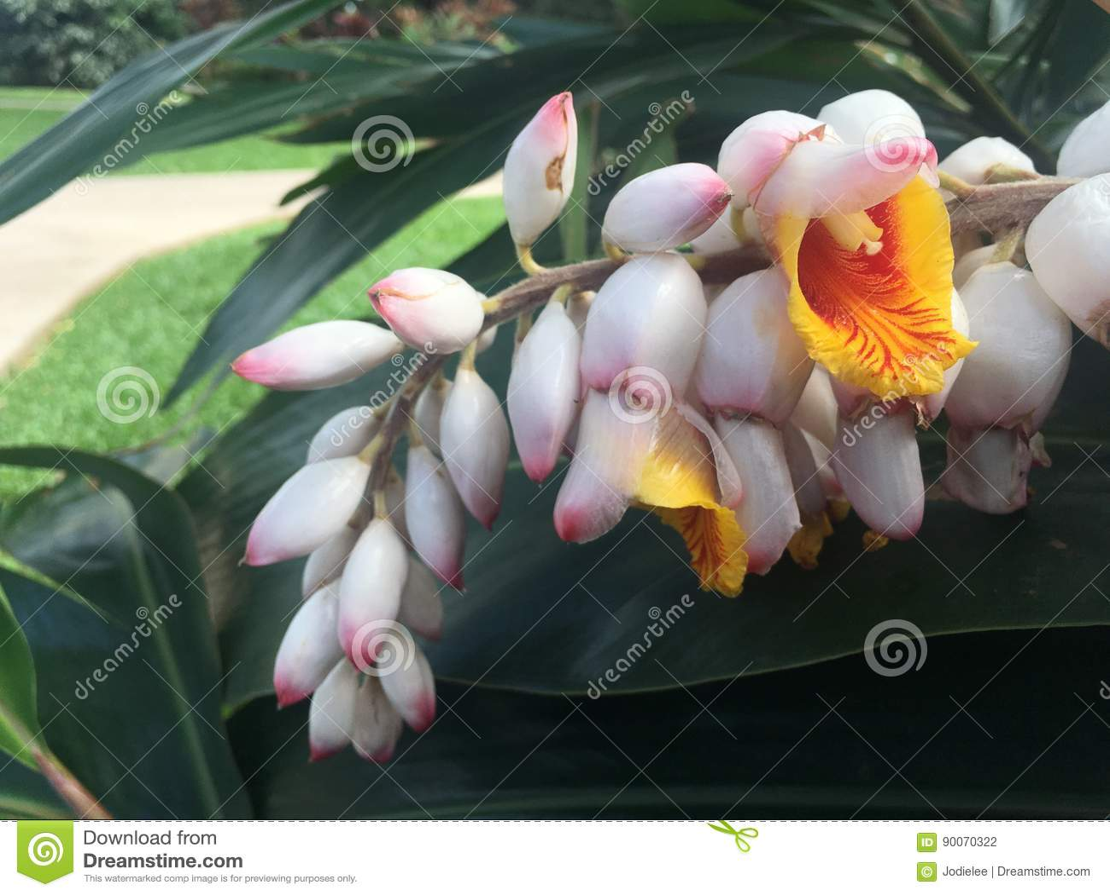 yellow and pink tropical hawaiian flowers wall art