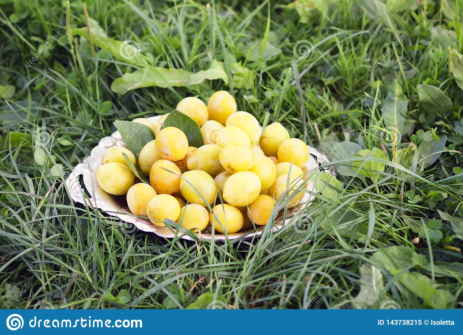 Yellow plums in a plate on green summer grass