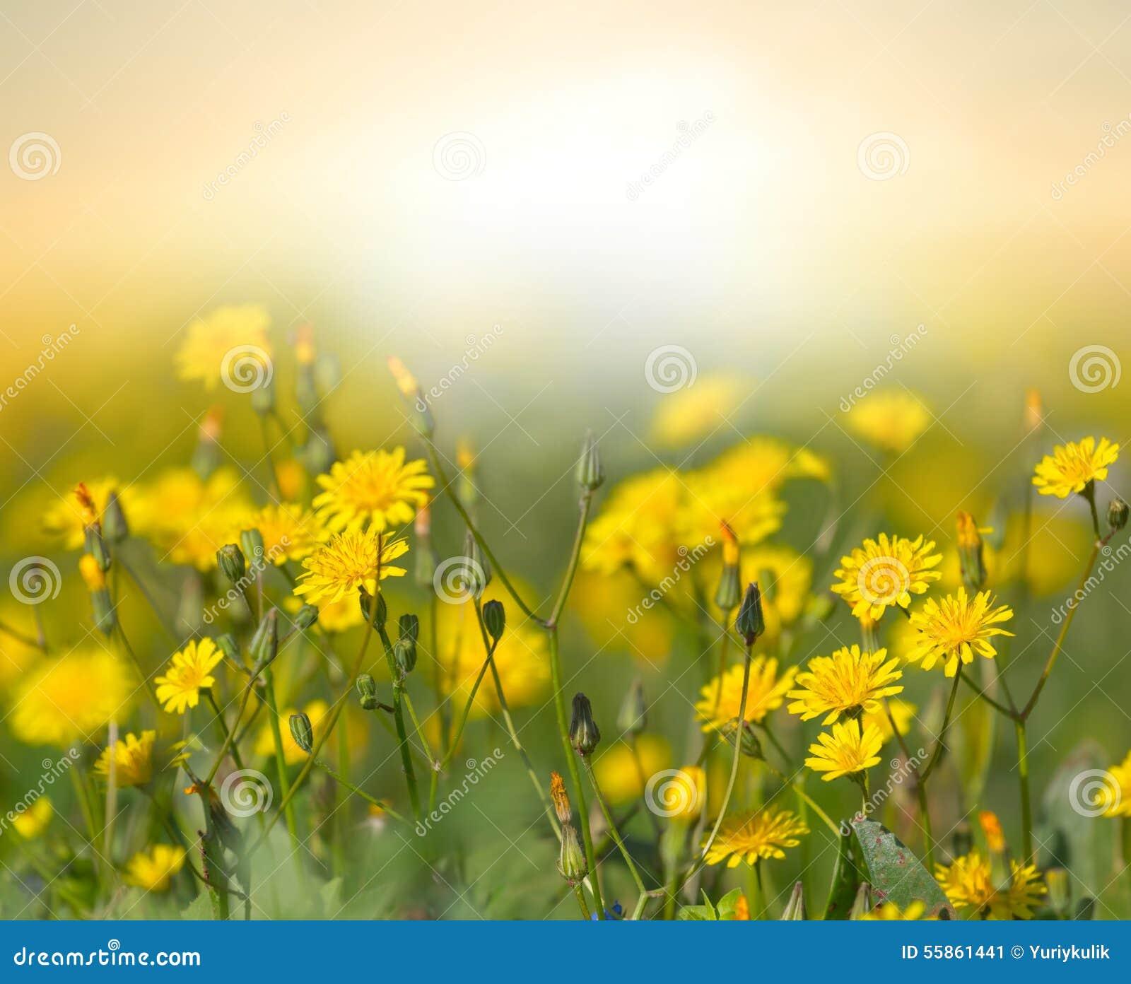 Yellow Prairie Flowers Stock Image Image Of Closeup 55861441