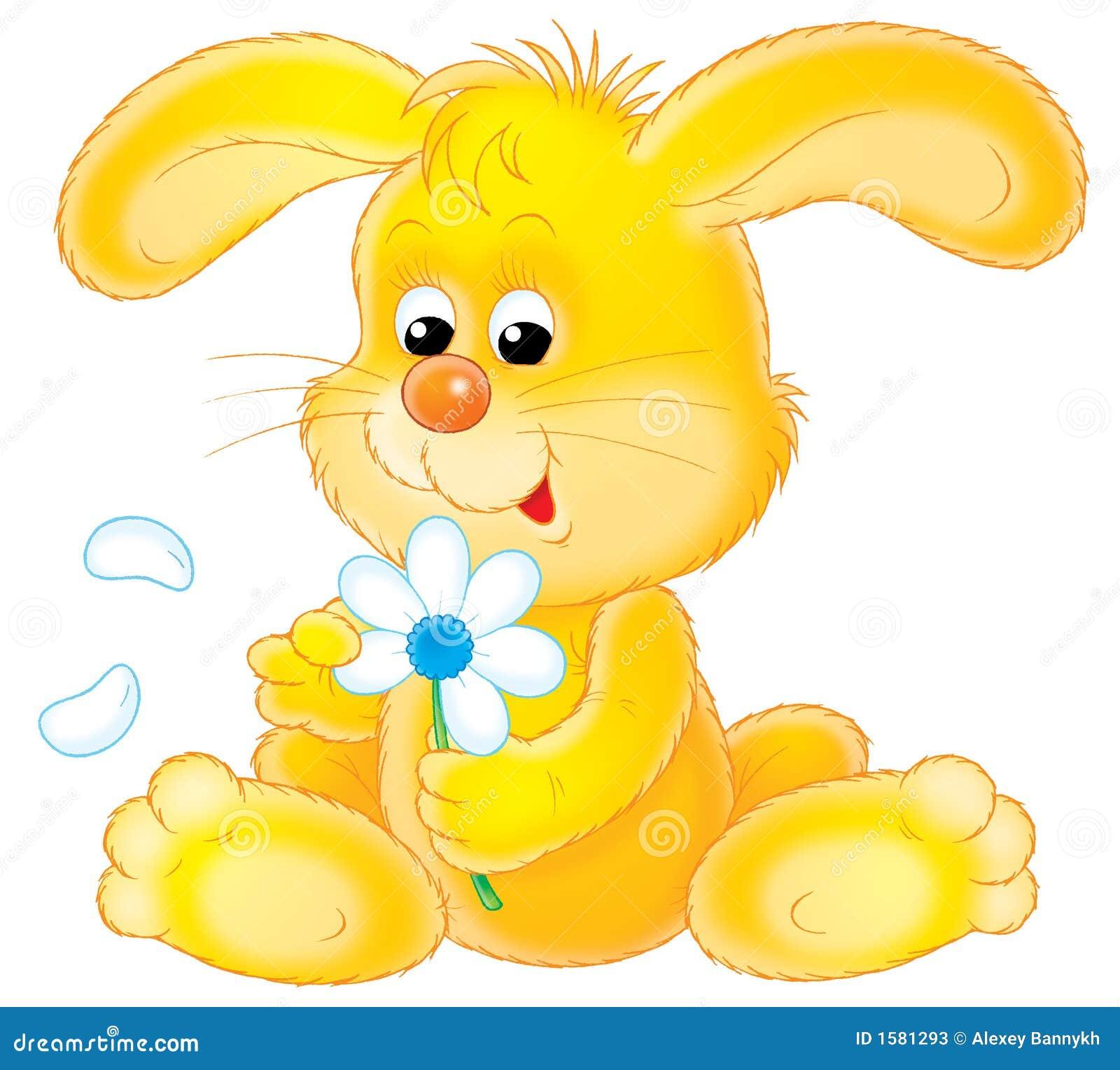 Yellow Rabbit Stock Ph...