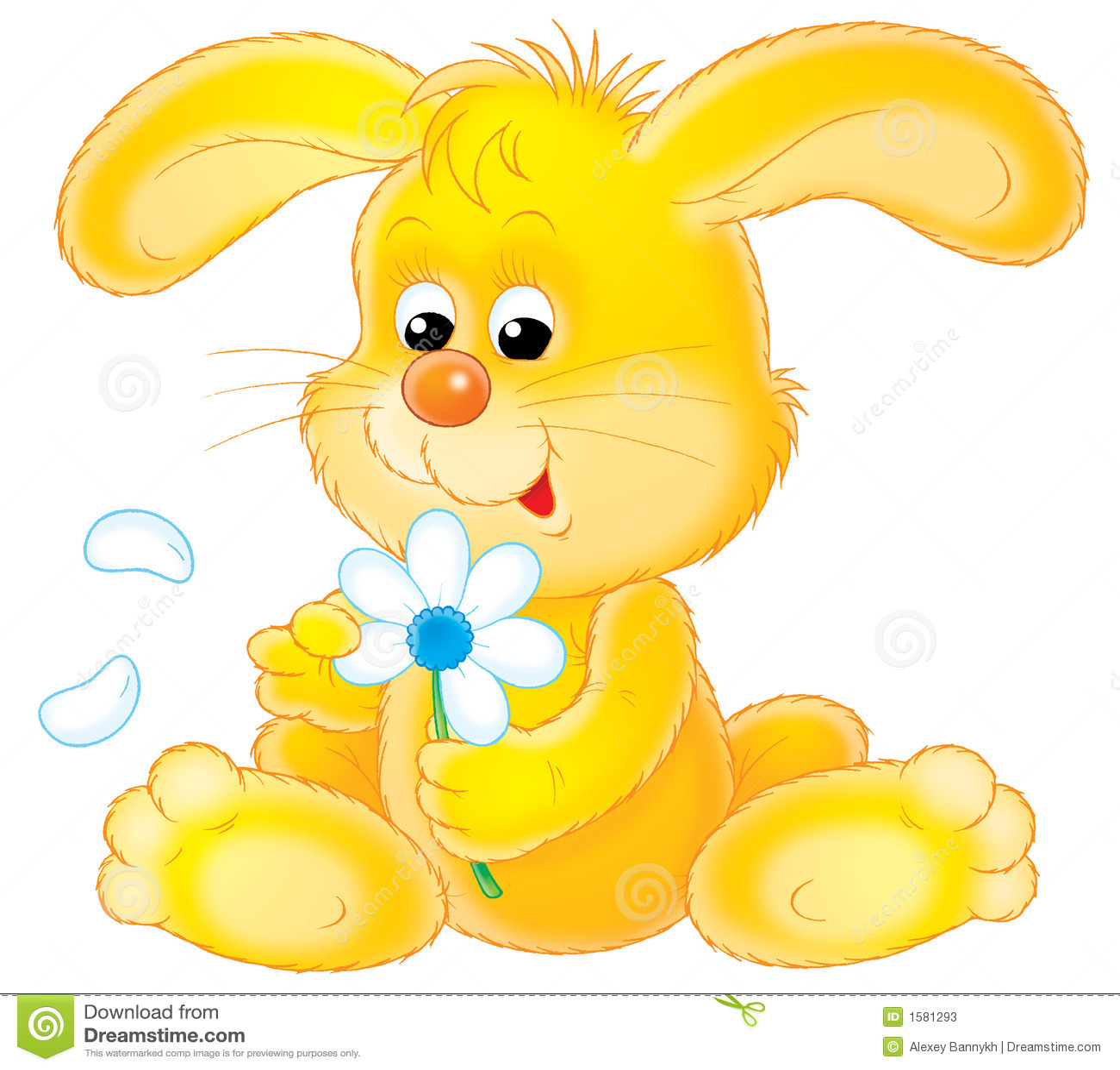 Yellow Rabbit Stock Photos Image 1581293